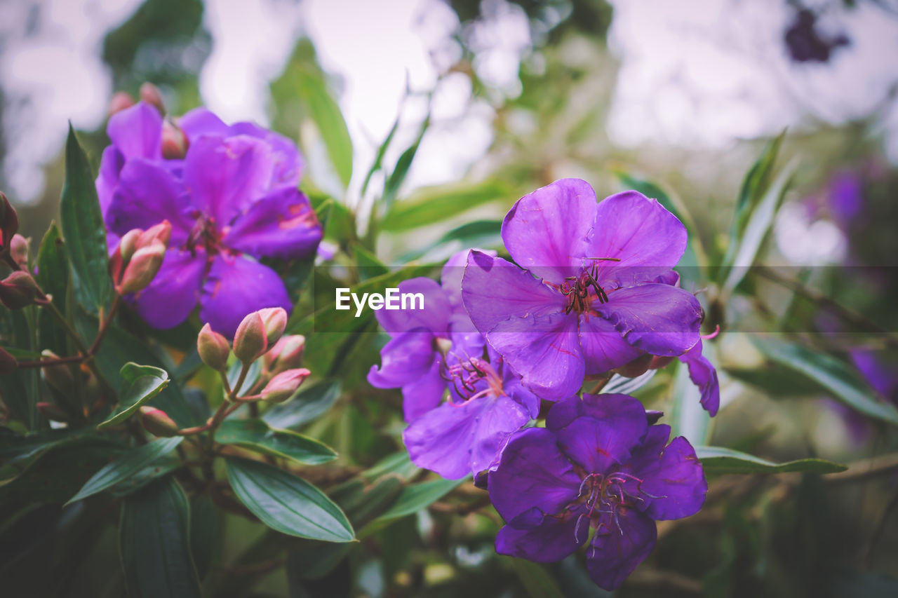 flowering plant, flower, vulnerability, fragility, freshness, plant, beauty in nature, petal, purple, close-up, growth, inflorescence, flower head, nature, focus on foreground, no people, day, outdoors, botany, selective focus