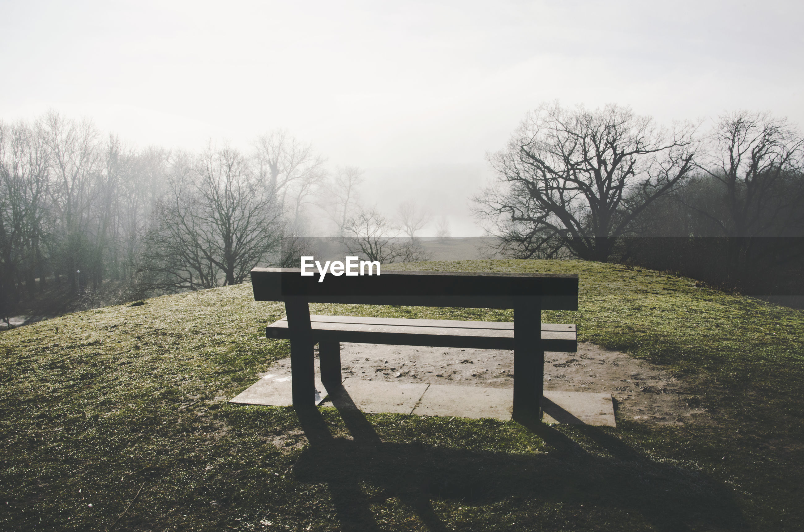EMPTY BENCH ON FIELD AGAINST TREES