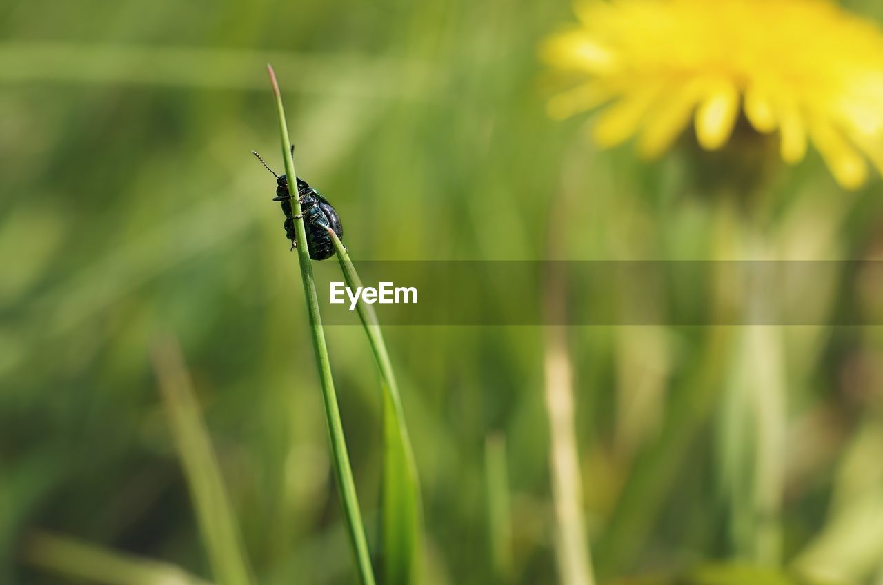 one animal, invertebrate, animals in the wild, animal wildlife, insect, animal themes, animal, plant, close-up, green color, growth, focus on foreground, day, nature, no people, beauty in nature, selective focus, vulnerability, animal wing, fragility, blade of grass