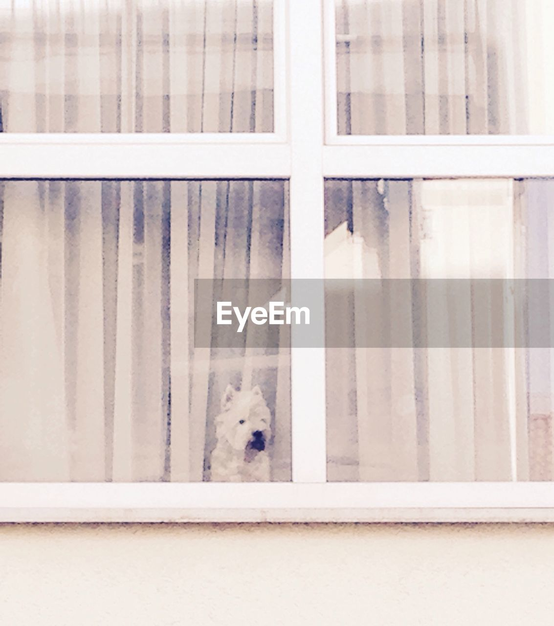 Close-Up Of A Dog Looking Through Window