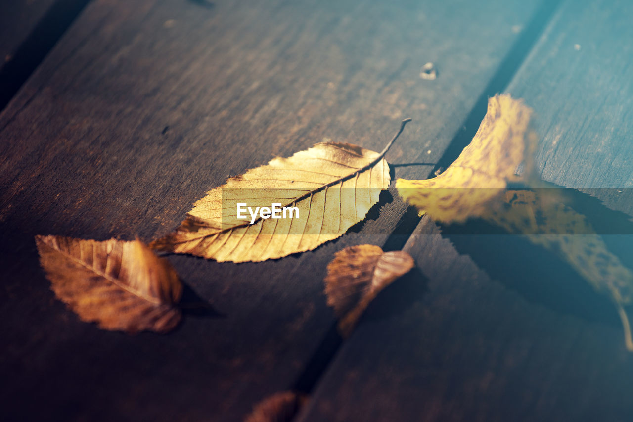 leaf, plant part, close-up, selective focus, wood - material, autumn, no people, dry, nature, fragility, table, vulnerability, yellow, leaves, day, change, leaf vein, brown, outdoors, still life