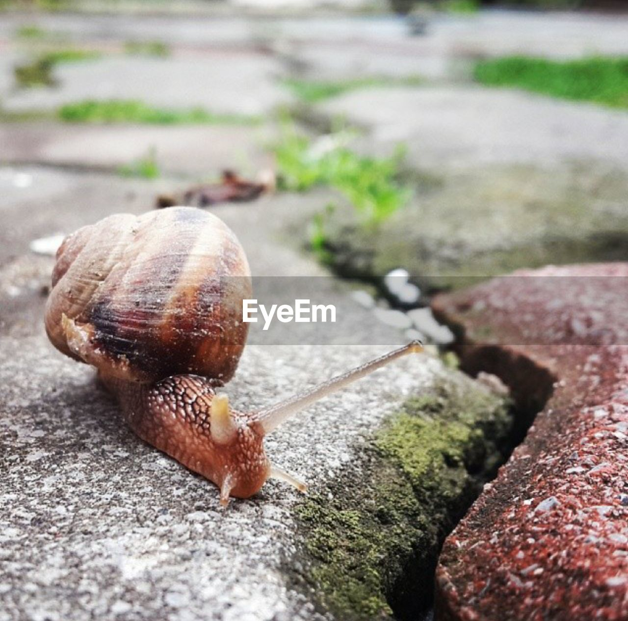 mollusk, gastropod, snail, animal, close-up, shell, animal themes, animal wildlife, animal shell, invertebrate, no people, animals in the wild, selective focus, day, one animal, animal antenna, nature, animal body part, outdoors, focus on foreground, crawling, small