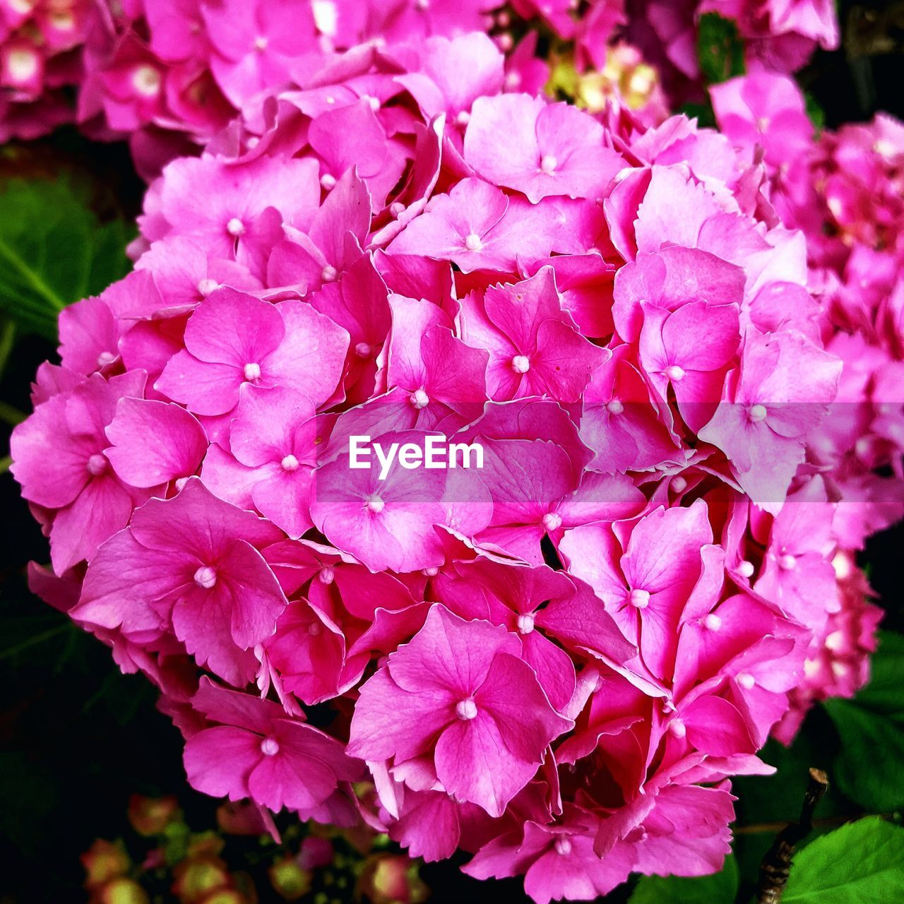 flower, nature, petal, beauty in nature, growth, plant, purple, fragility, no people, pink color, blooming, outdoors, flower head, freshness, bougainvillea, close-up, day