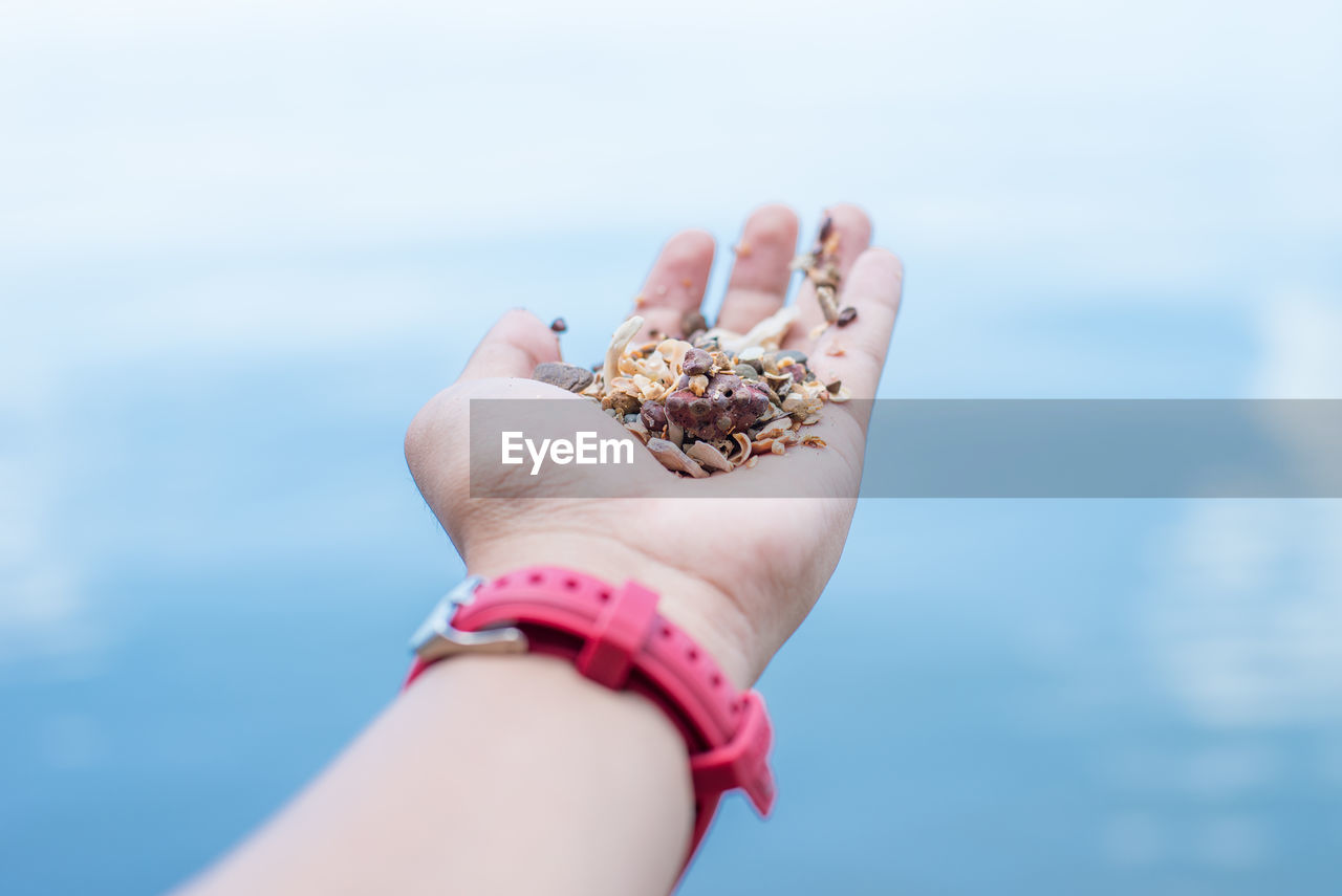 Cropped Hand Holding Seeds Against Sky