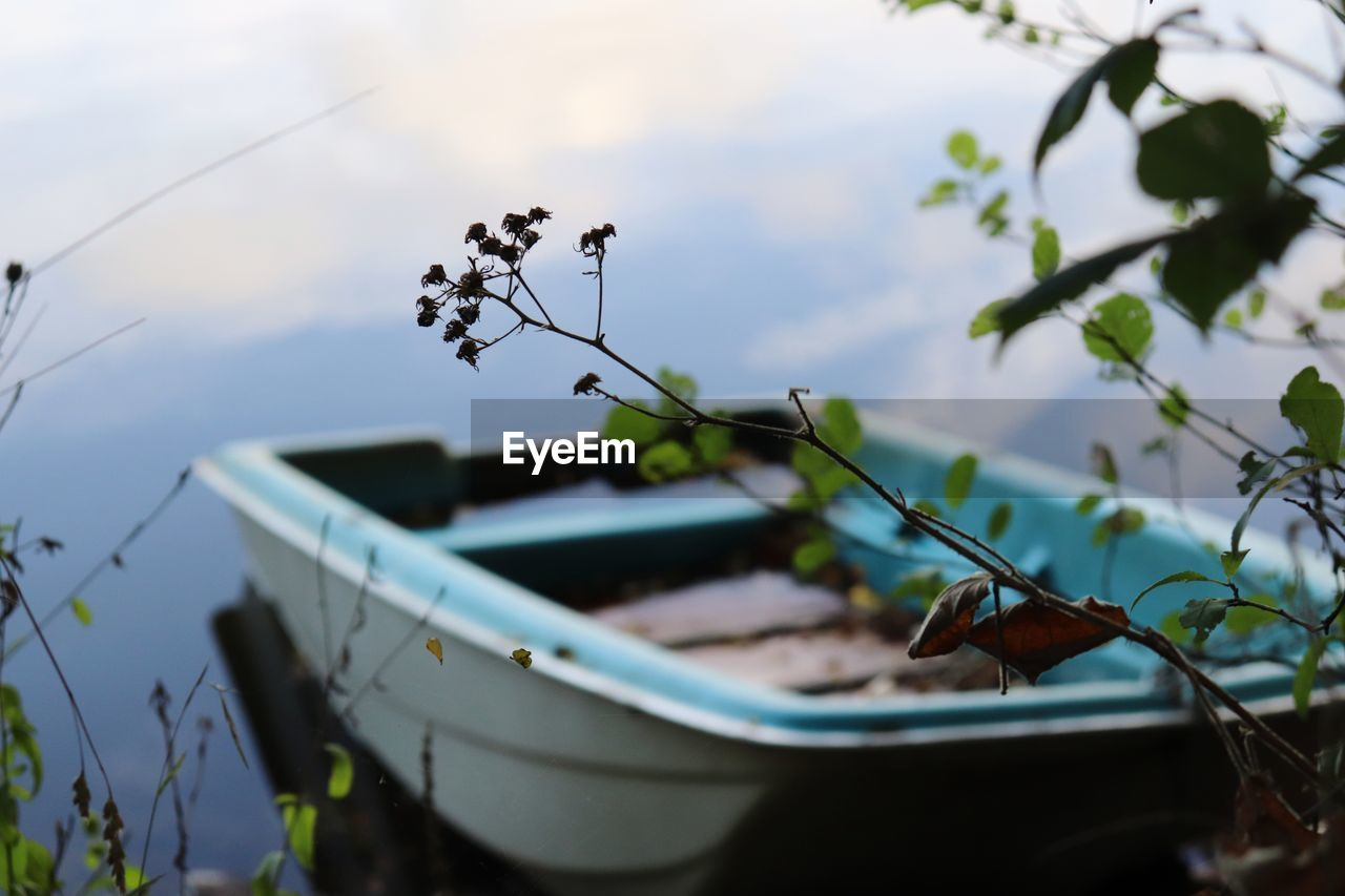 nautical vessel, nature, plant, mode of transportation, transportation, no people, day, selective focus, growth, plant part, leaf, beauty in nature, water, moored, outdoors, focus on foreground, animal themes, animal, sky