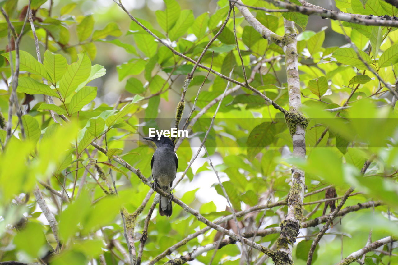 animal wildlife, animal themes, animals in the wild, animal, tree, perching, bird, plant, vertebrate, one animal, branch, plant part, leaf, growth, green color, nature, no people, day, low angle view, beauty in nature, outdoors