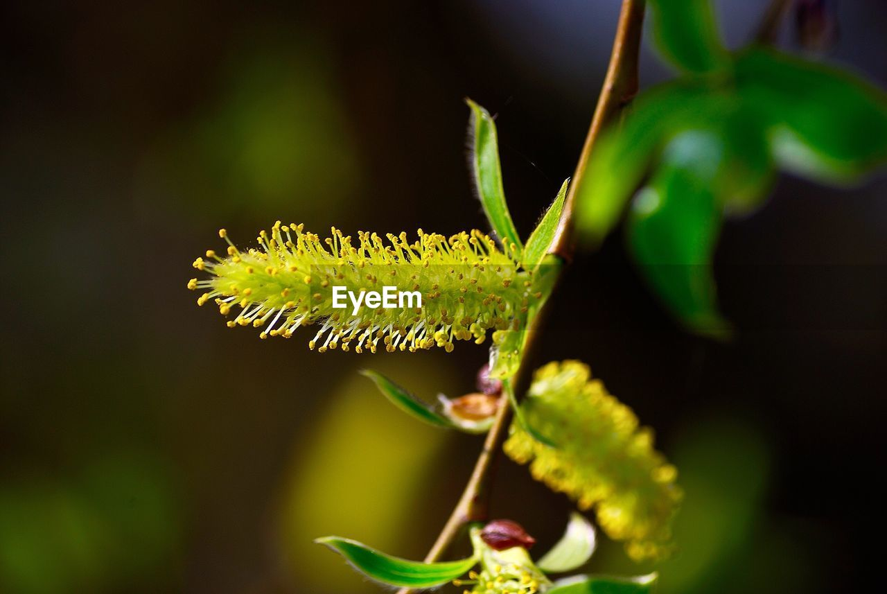 green color, plant, growth, close-up, animals in the wild, plant part, leaf, nature, one animal, animal wildlife, insect, no people, animal themes, invertebrate, animal, beauty in nature, focus on foreground, flower, selective focus, day, outdoors, sepal