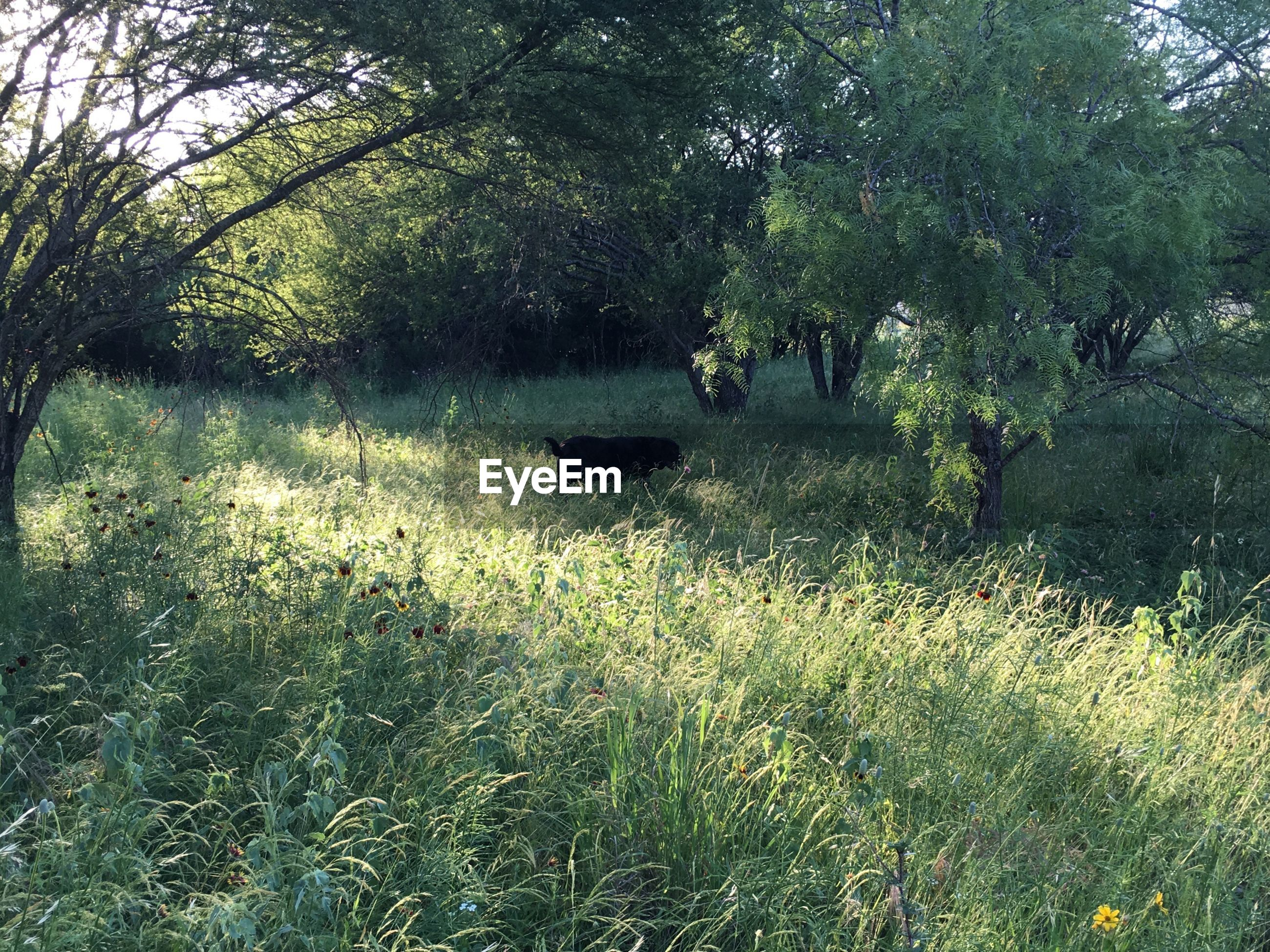 Dog on grassy field by trees