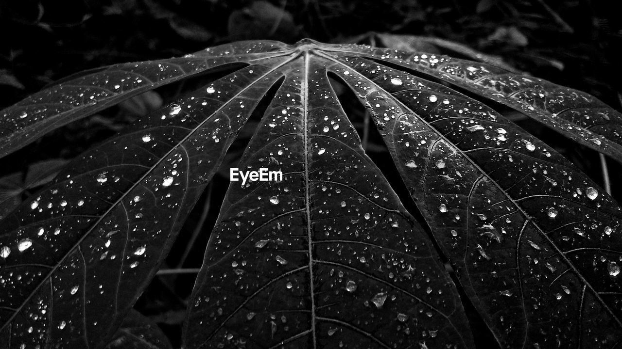 wet, drop, water, close-up, rain, no people, nature, raindrop, plant, focus on foreground, outdoors, rainy season, night, beauty in nature, dew, growth, tranquility, purity, blade of grass