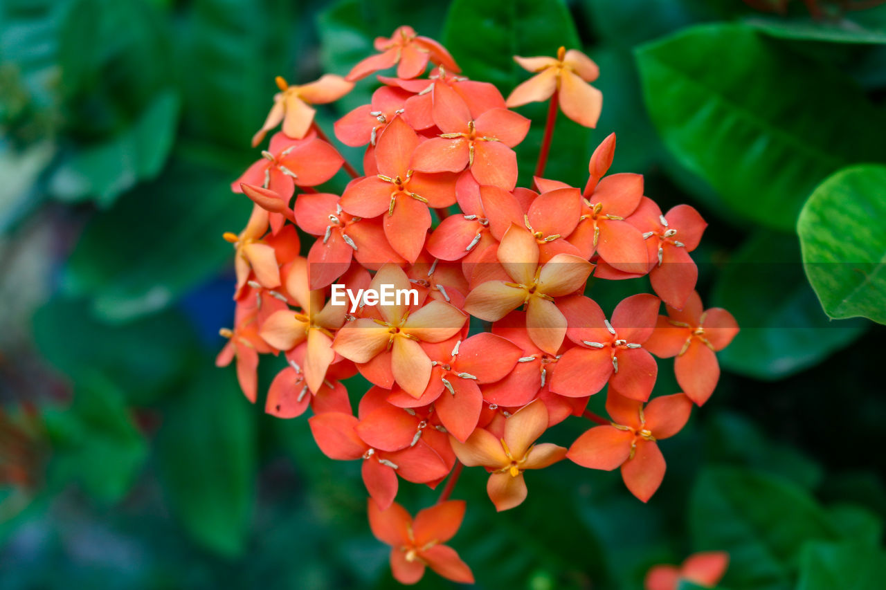 freshness, flower, flowering plant, growth, plant, petal, beauty in nature, close-up, inflorescence, vulnerability, flower head, fragility, orange color, focus on foreground, day, nature, no people, green color, plant part, leaf, outdoors, pollen