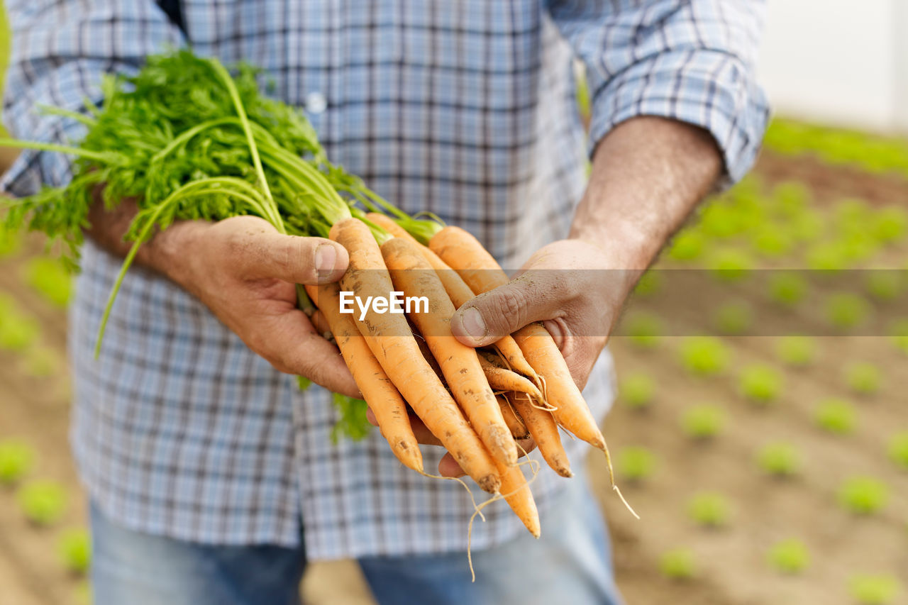 Midsection of man holding carrots at farm
