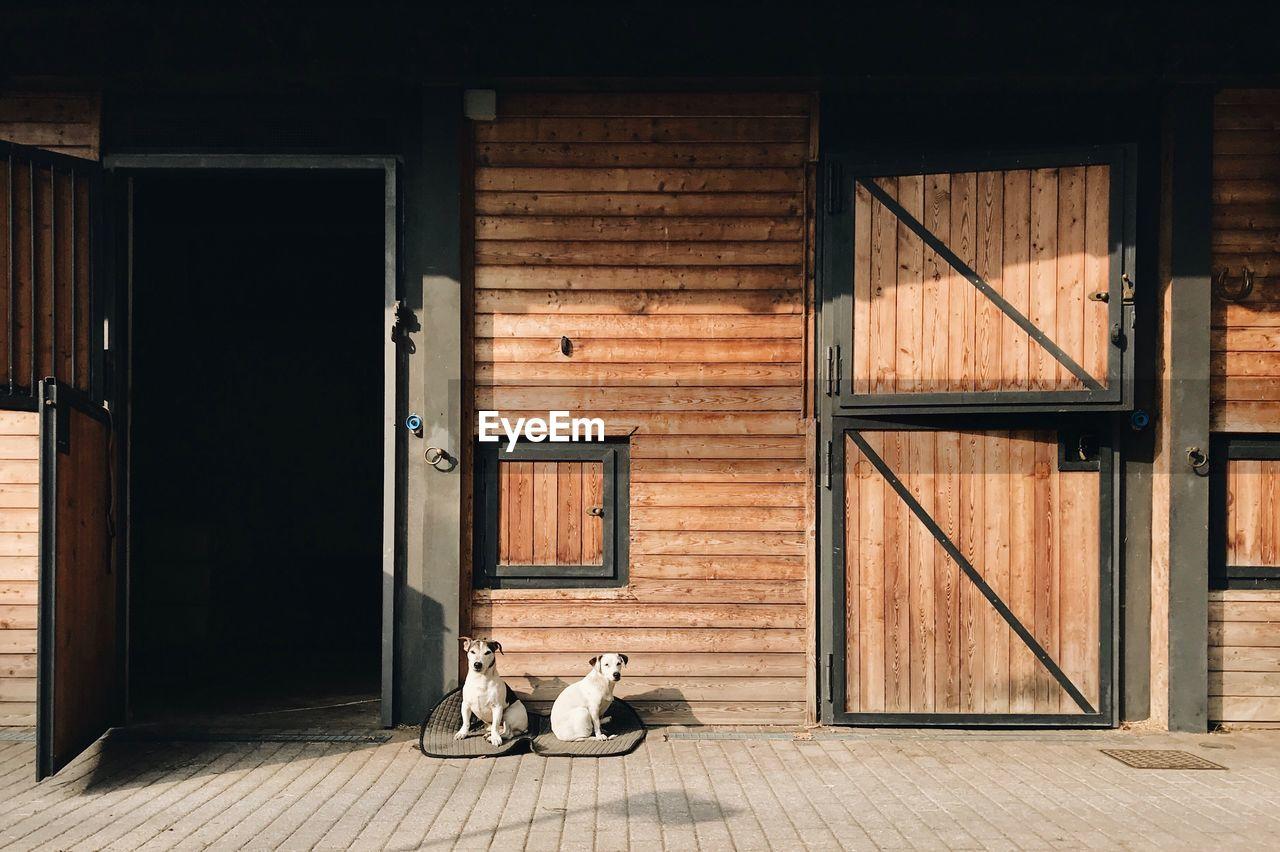 Dogs sitting on wooden floor by door