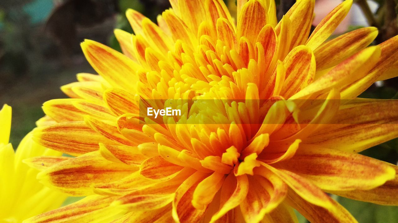 flower, flowering plant, fragility, petal, vulnerability, flower head, beauty in nature, freshness, inflorescence, close-up, yellow, plant, growth, focus on foreground, nature, pollen, no people, day, natural pattern