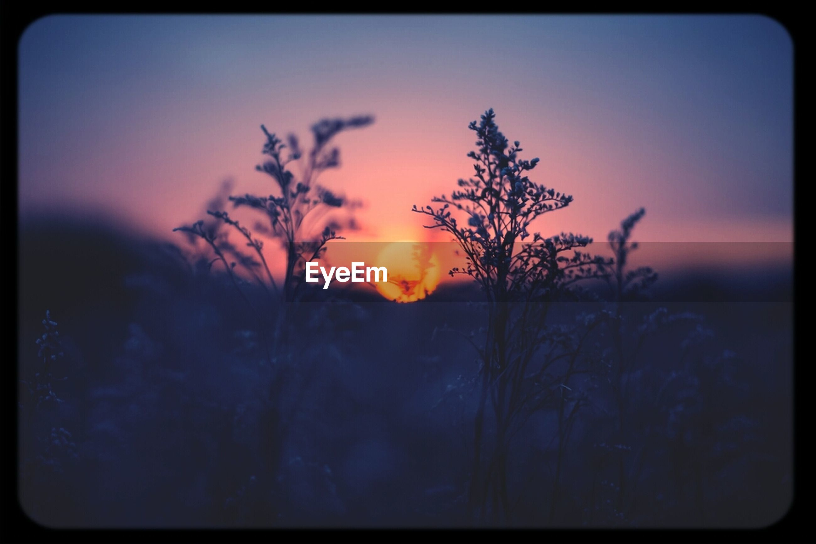 sunset, transfer print, silhouette, sky, beauty in nature, auto post production filter, tranquility, tranquil scene, scenics, nature, growth, orange color, tree, plant, dusk, idyllic, branch, outdoors, cloud - sky, no people