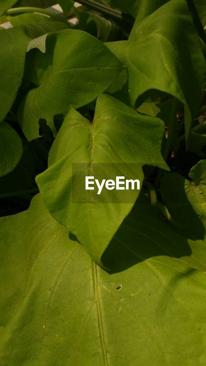 leaf, green color, nature, growth, no people, full frame, close-up, day, plant, outdoors, backgrounds, beauty in nature, freshness