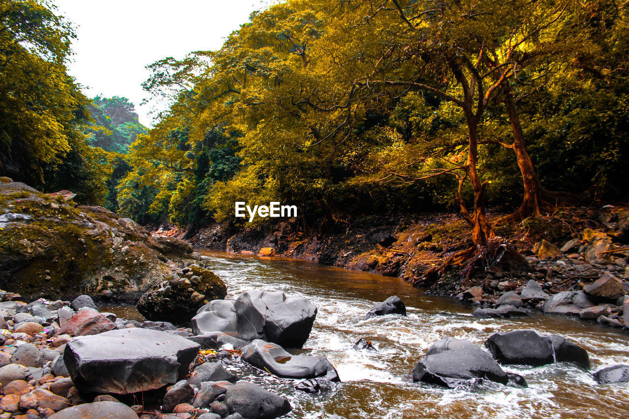 tree, water, rock, plant, beauty in nature, solid, rock - object, nature, forest, land, tranquility, flowing water, day, scenics - nature, no people, change, autumn, growth, river, flowing, outdoors, stream - flowing water