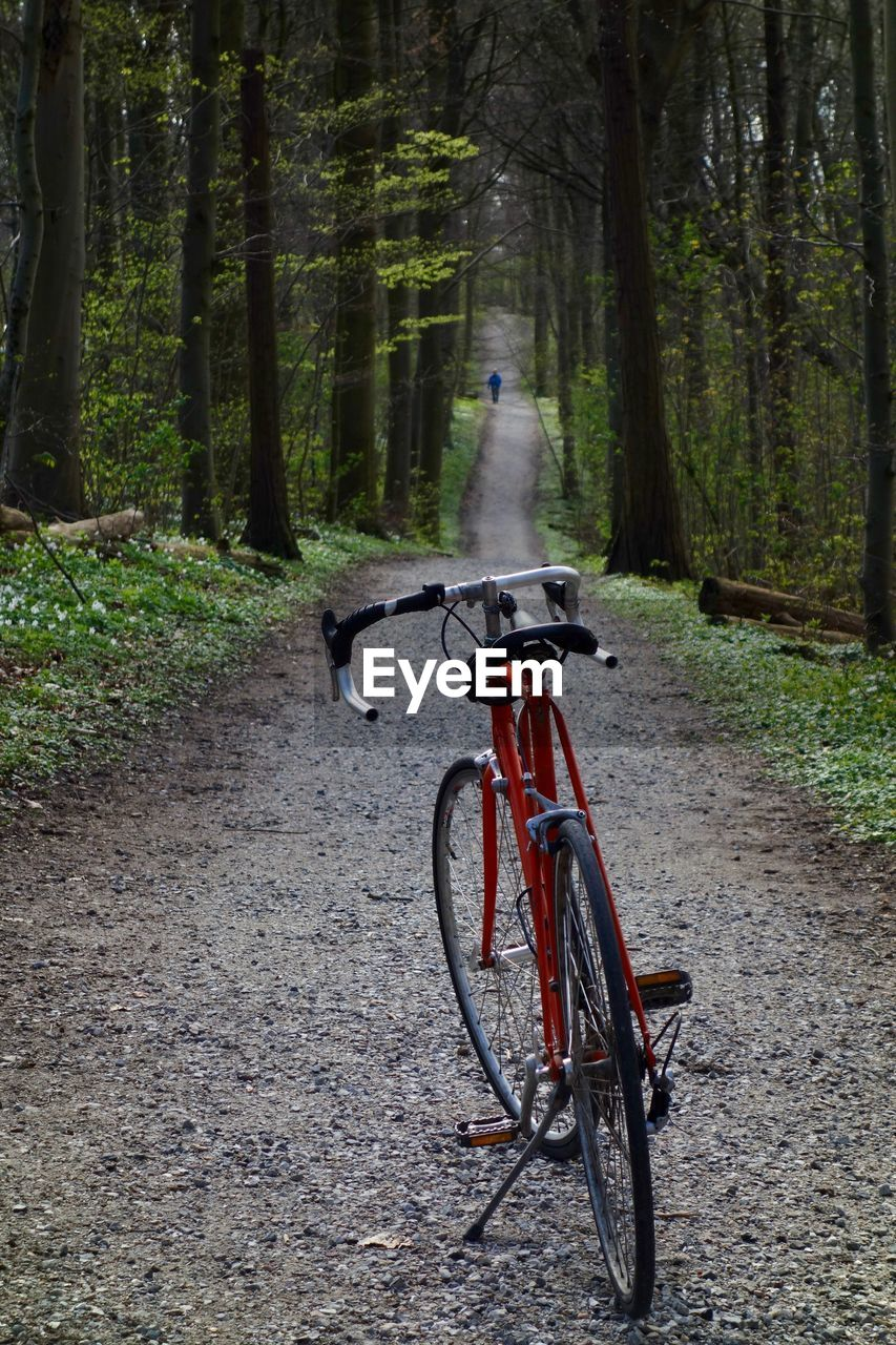 BICYCLES IN FOREST
