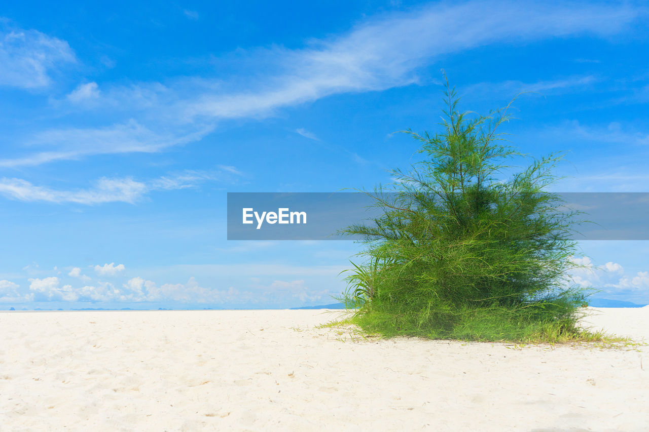 sky, land, beach, sand, sea, cloud - sky, beauty in nature, scenics - nature, plant, tranquil scene, blue, tranquility, water, nature, growth, tree, green color, day, no people, horizon over water, outdoors, turquoise colored