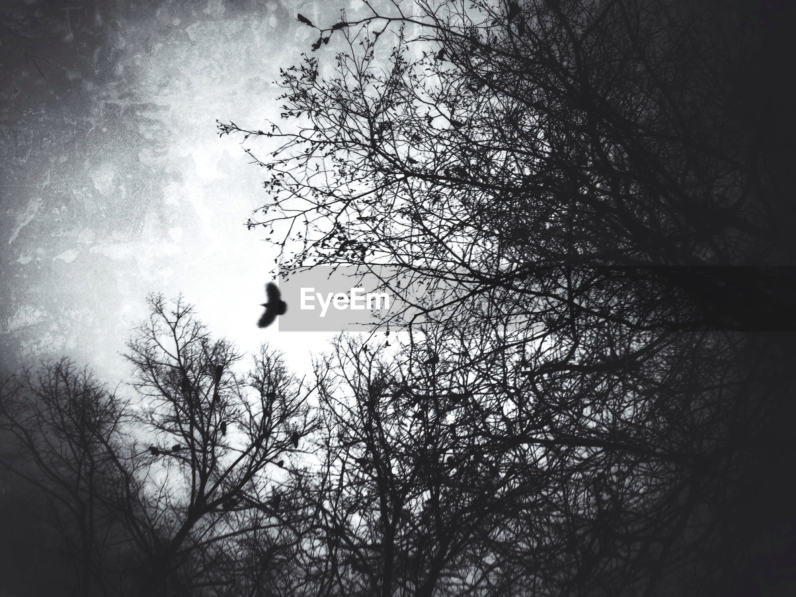 Low angle view of silhouette bare tree and bird flying against sky