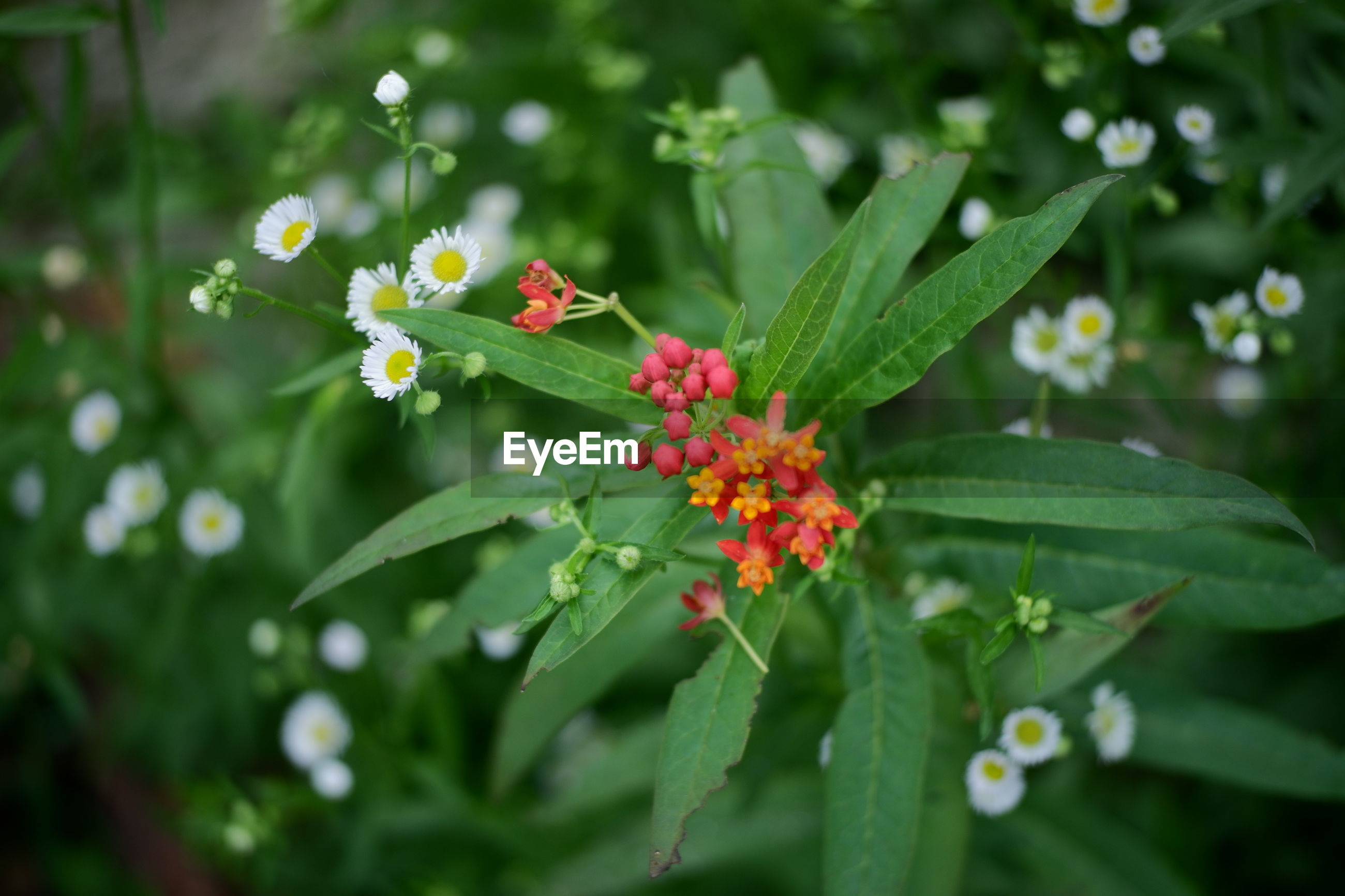 CLOSE-UP OF FLOWERING PLANT WITH RED FLOWER