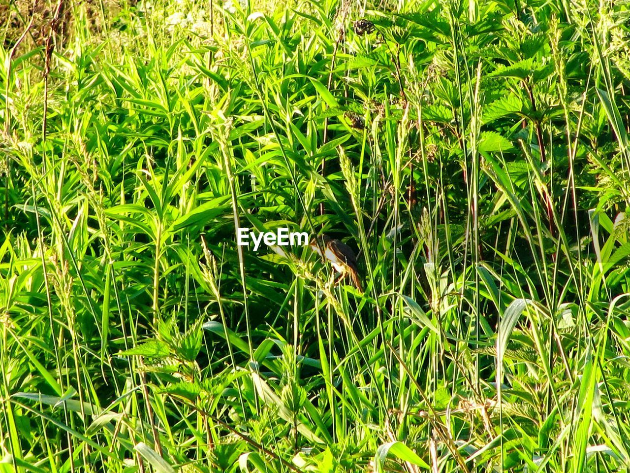 green color, plant, growth, grass, land, nature, field, beauty in nature, full frame, backgrounds, day, tranquility, no people, plant part, outdoors, high angle view, leaf, sunlight, close-up, lush foliage, blade of grass