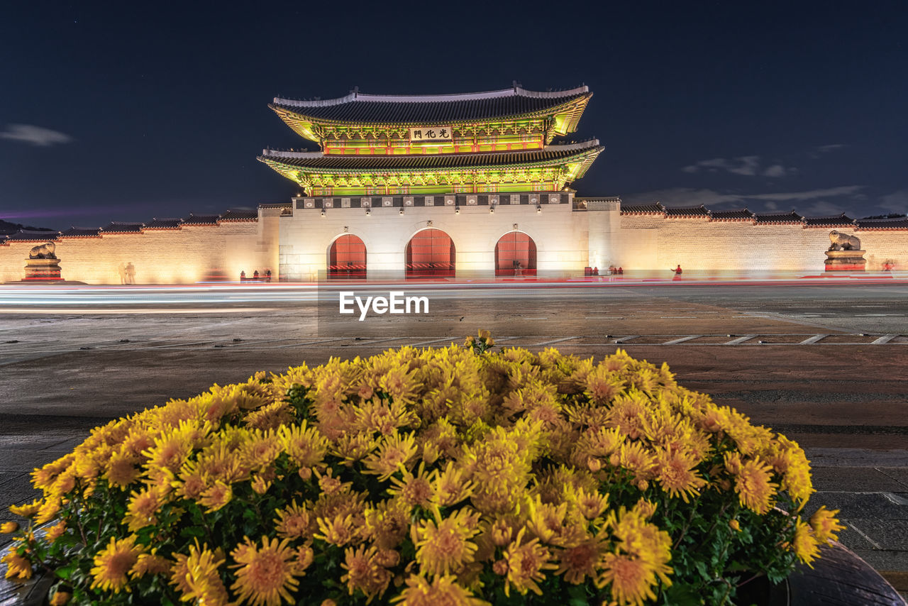 architecture, built structure, plant, flower, travel destinations, nature, flowering plant, travel, sky, building exterior, history, tourism, the past, no people, illuminated, city, building, freshness, belief, beauty in nature, flowerbed