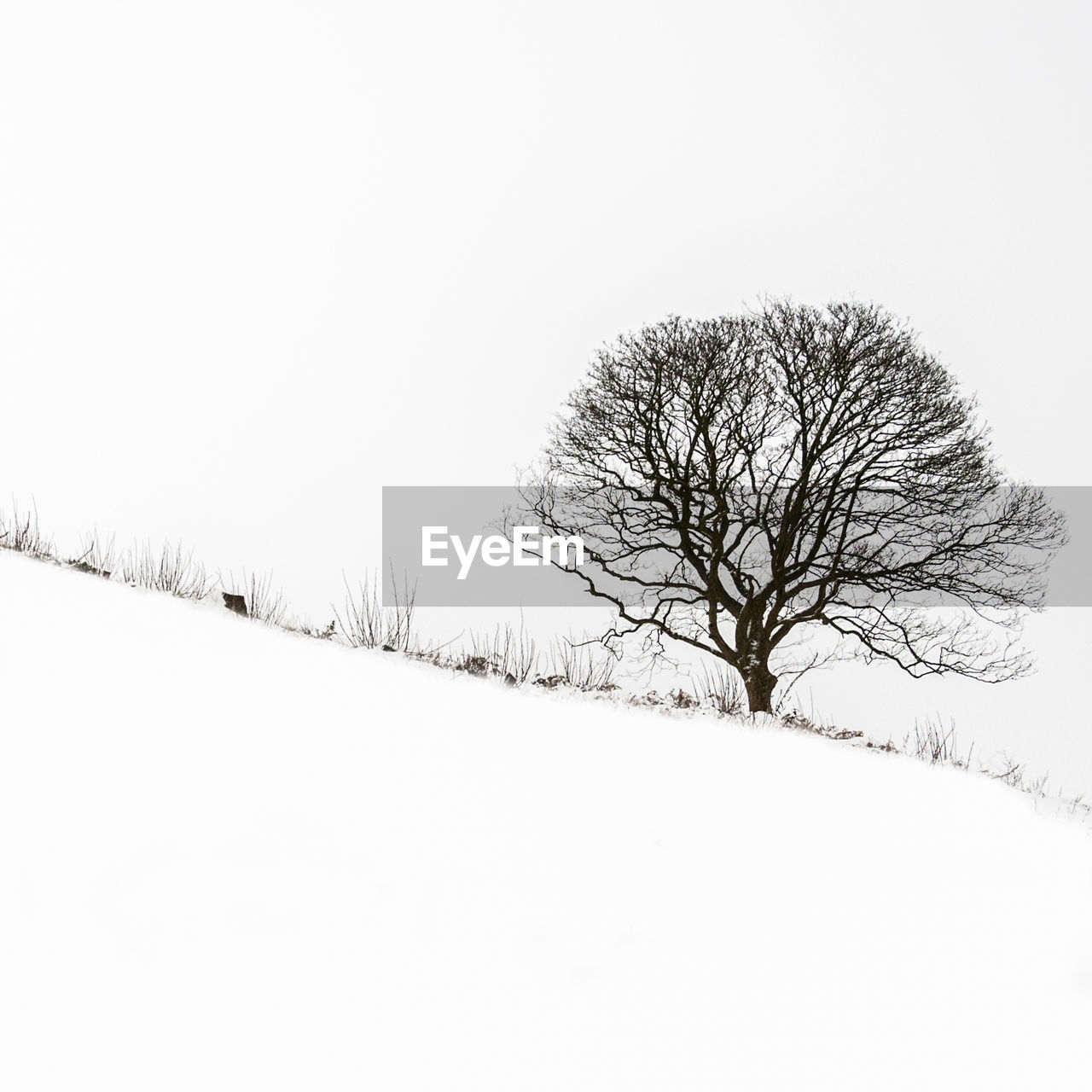 cold temperature, snow, winter, tree, bare tree, beauty in nature, tranquility, scenics - nature, plant, sky, tranquil scene, field, no people, clear sky, landscape, environment, non-urban scene, land, white color, outdoors, cold, isolated, snowing