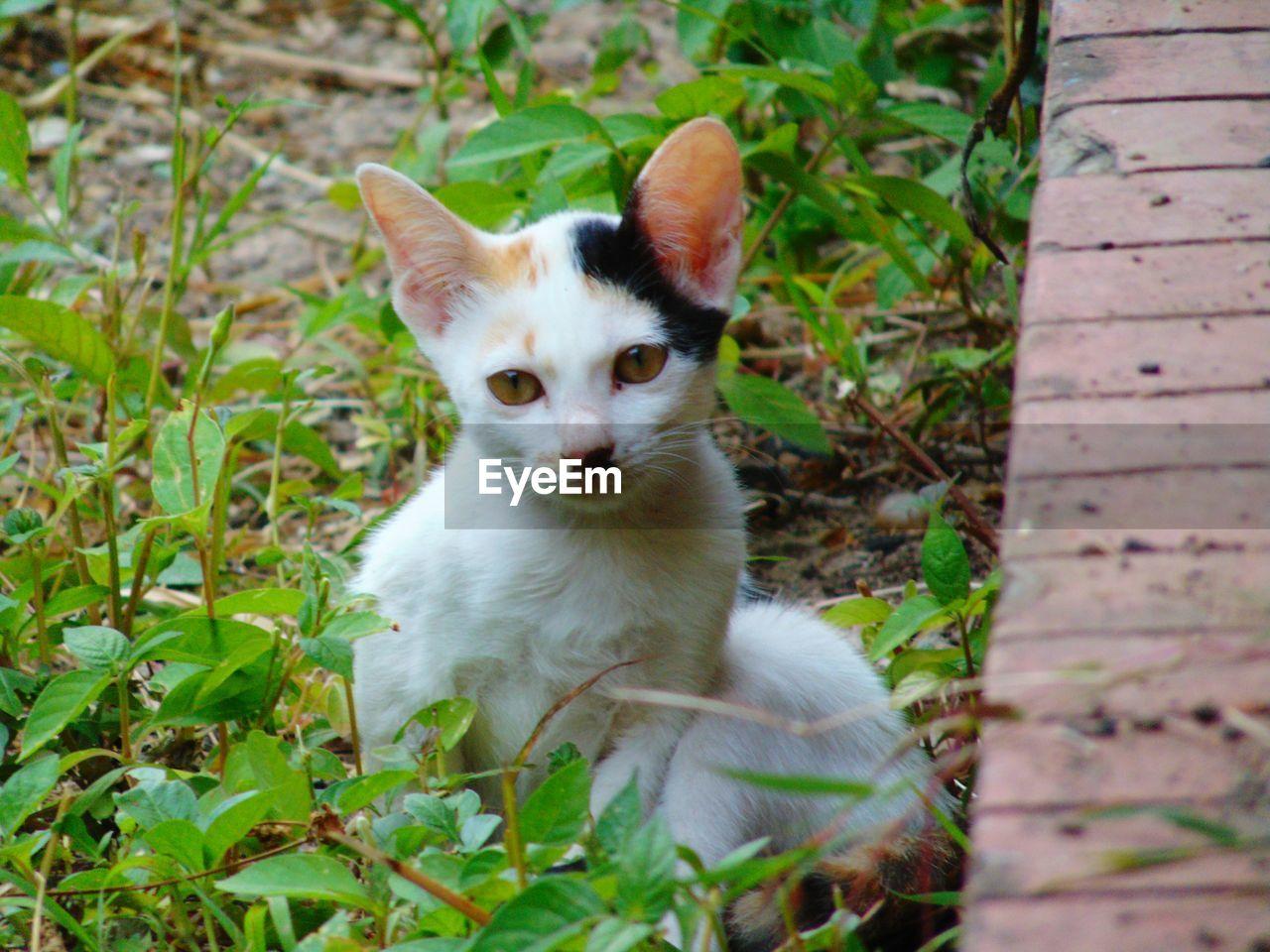 CLOSE-UP PORTRAIT OF CAT SITTING ON PLANT