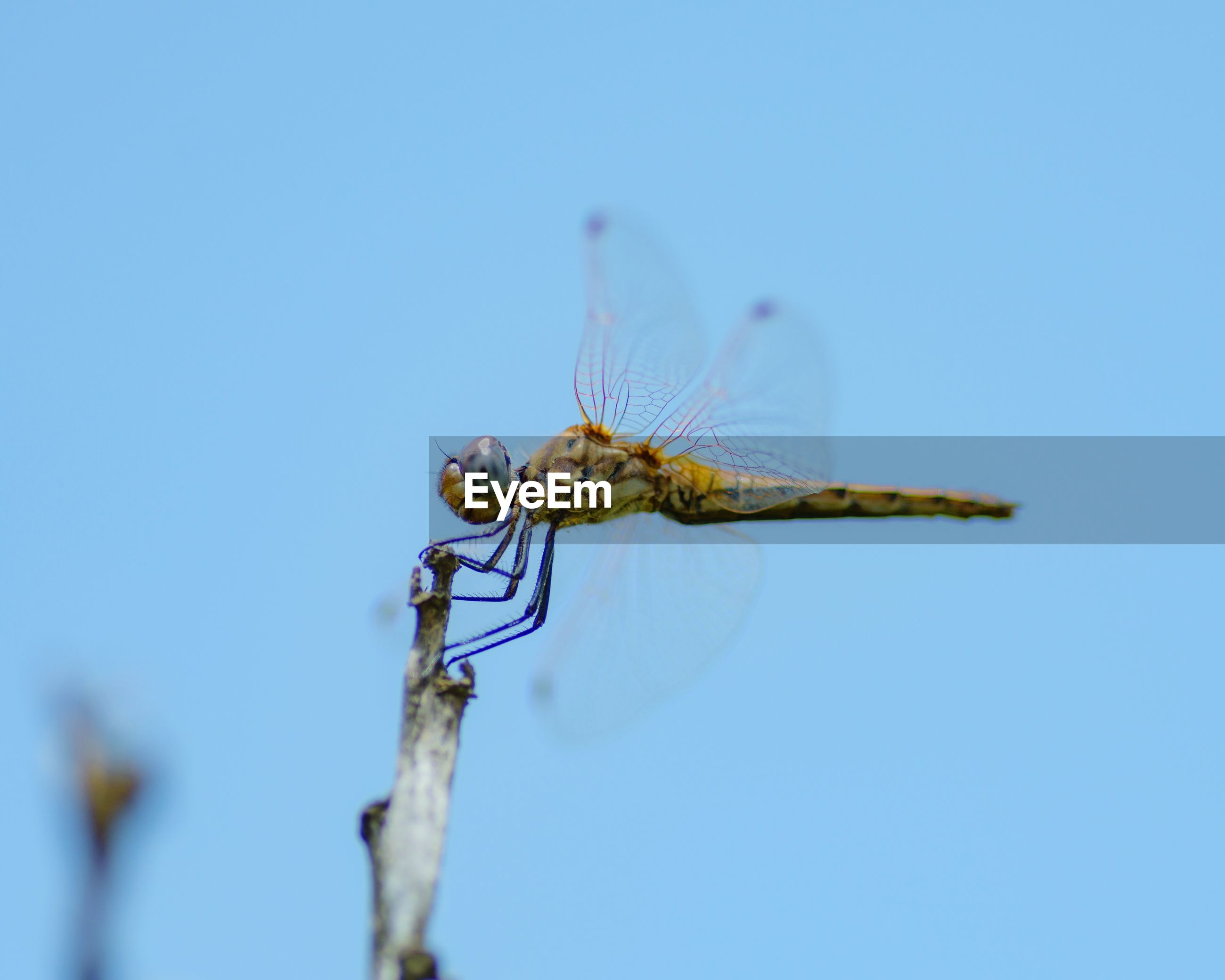 Close-up of dragonfly on plant against blue sky