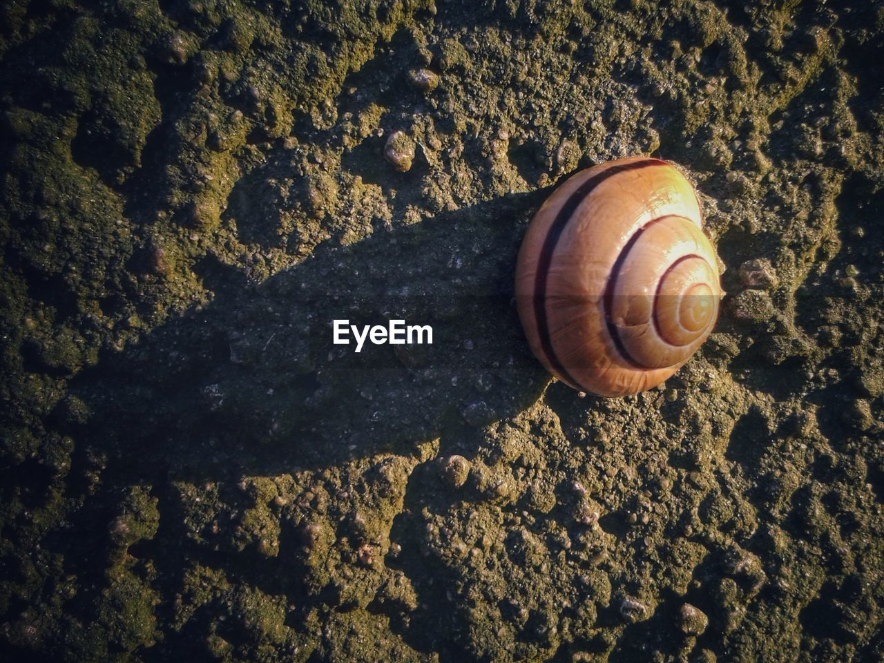 snail, gastropod, animal shell, one animal, animal themes, wildlife, animals in the wild, nature, fragility, no people, close-up, slimy, outdoors, day, sand, sea life