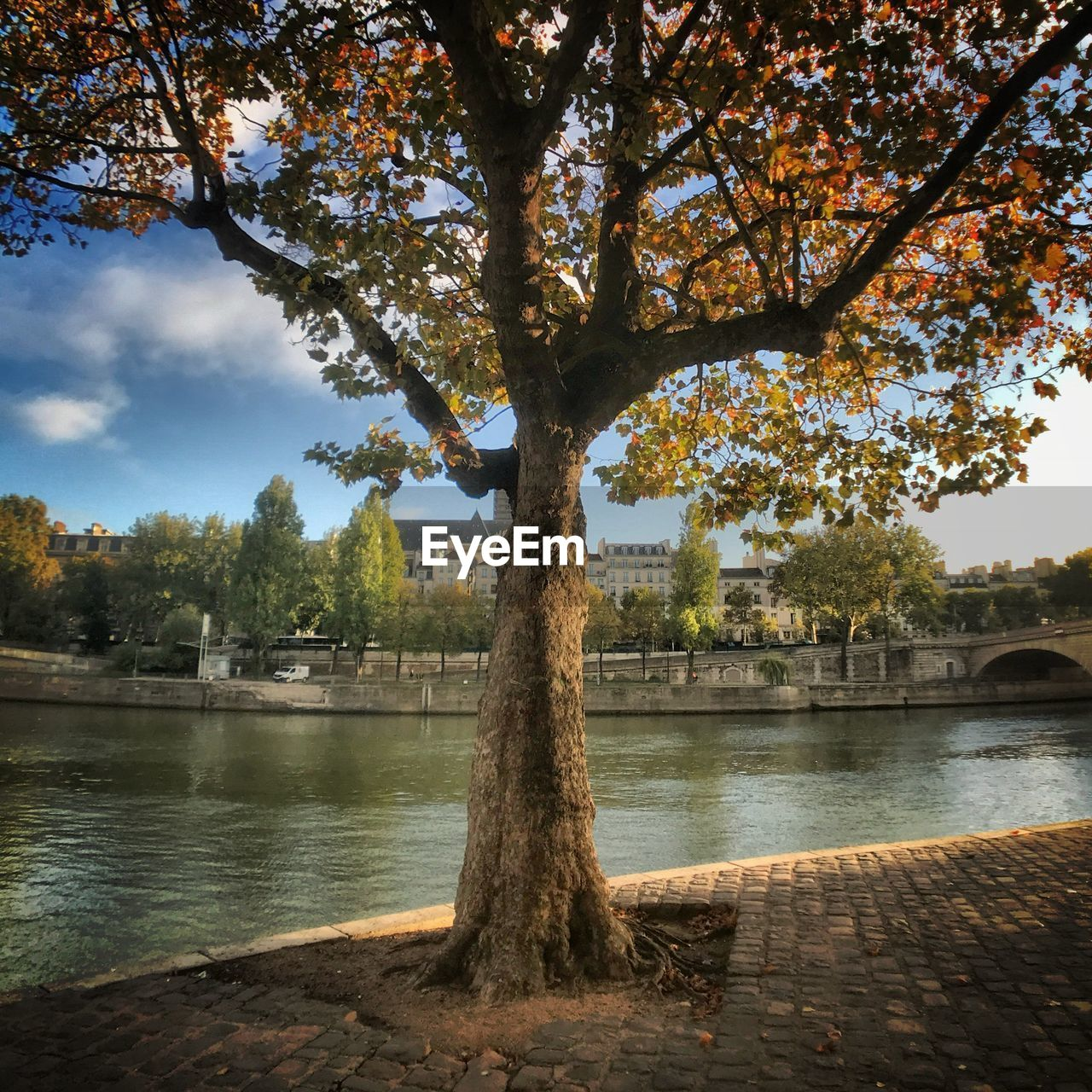 tree, water, river, tree trunk, nature, branch, growth, outdoors, day, sky, beauty in nature, no people, tranquility, scenics, built structure, riverbank, architecture