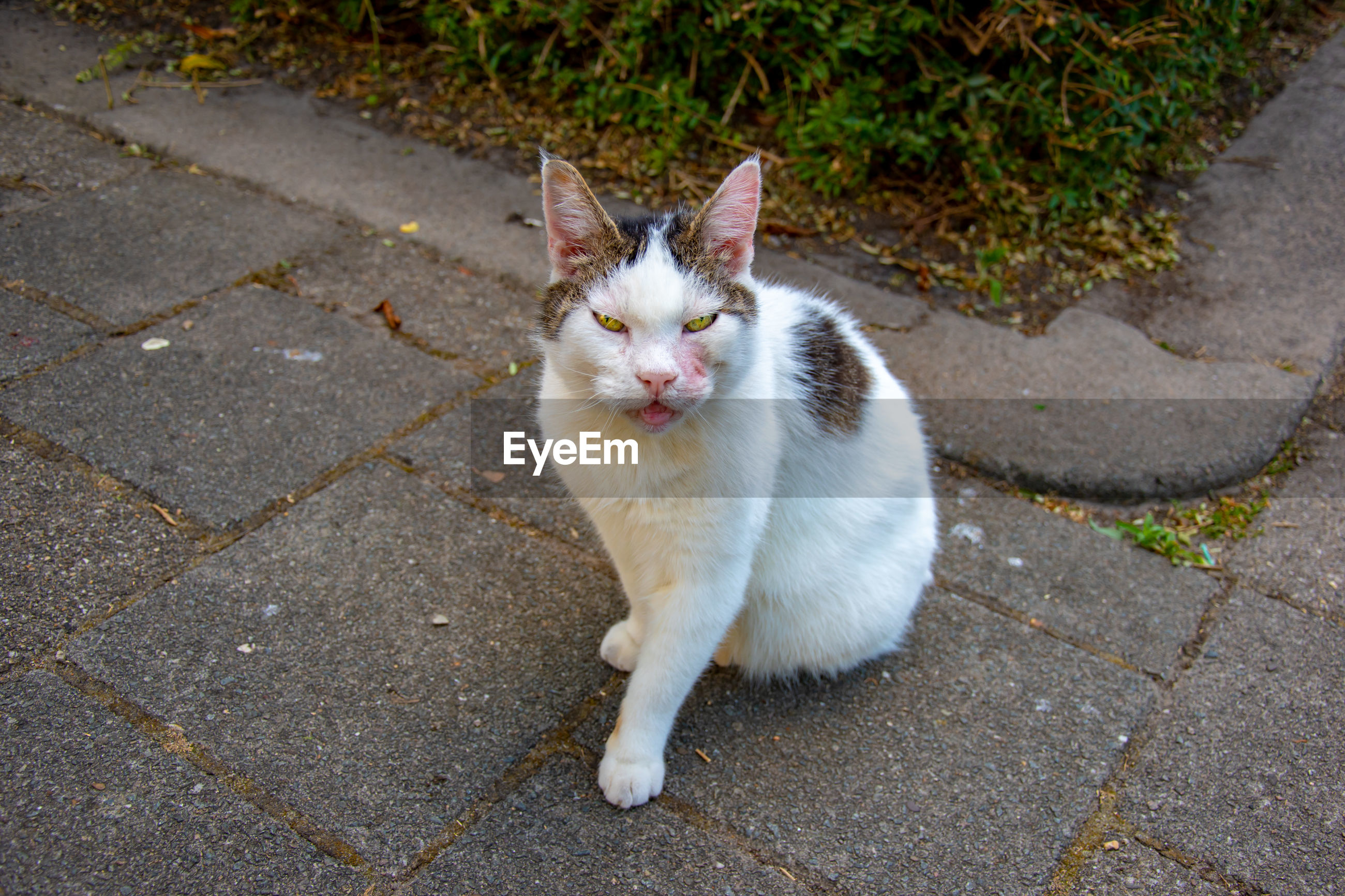HIGH ANGLE VIEW PORTRAIT OF CAT ON STREET
