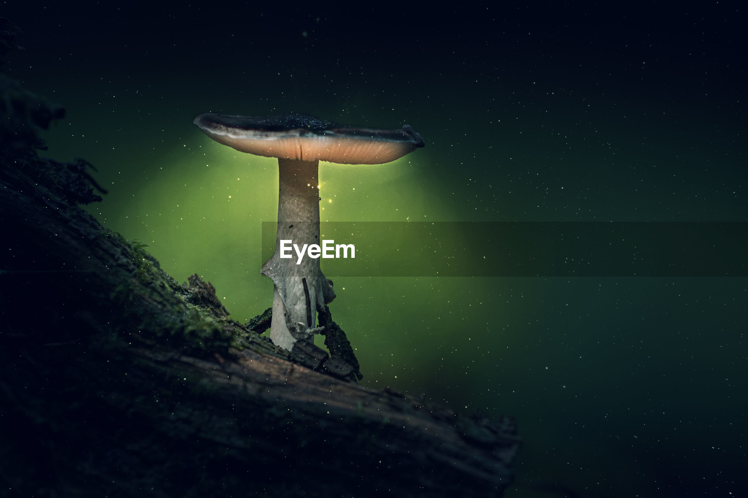 LOW ANGLE VIEW OF MUSHROOM ON FIELD AGAINST SKY