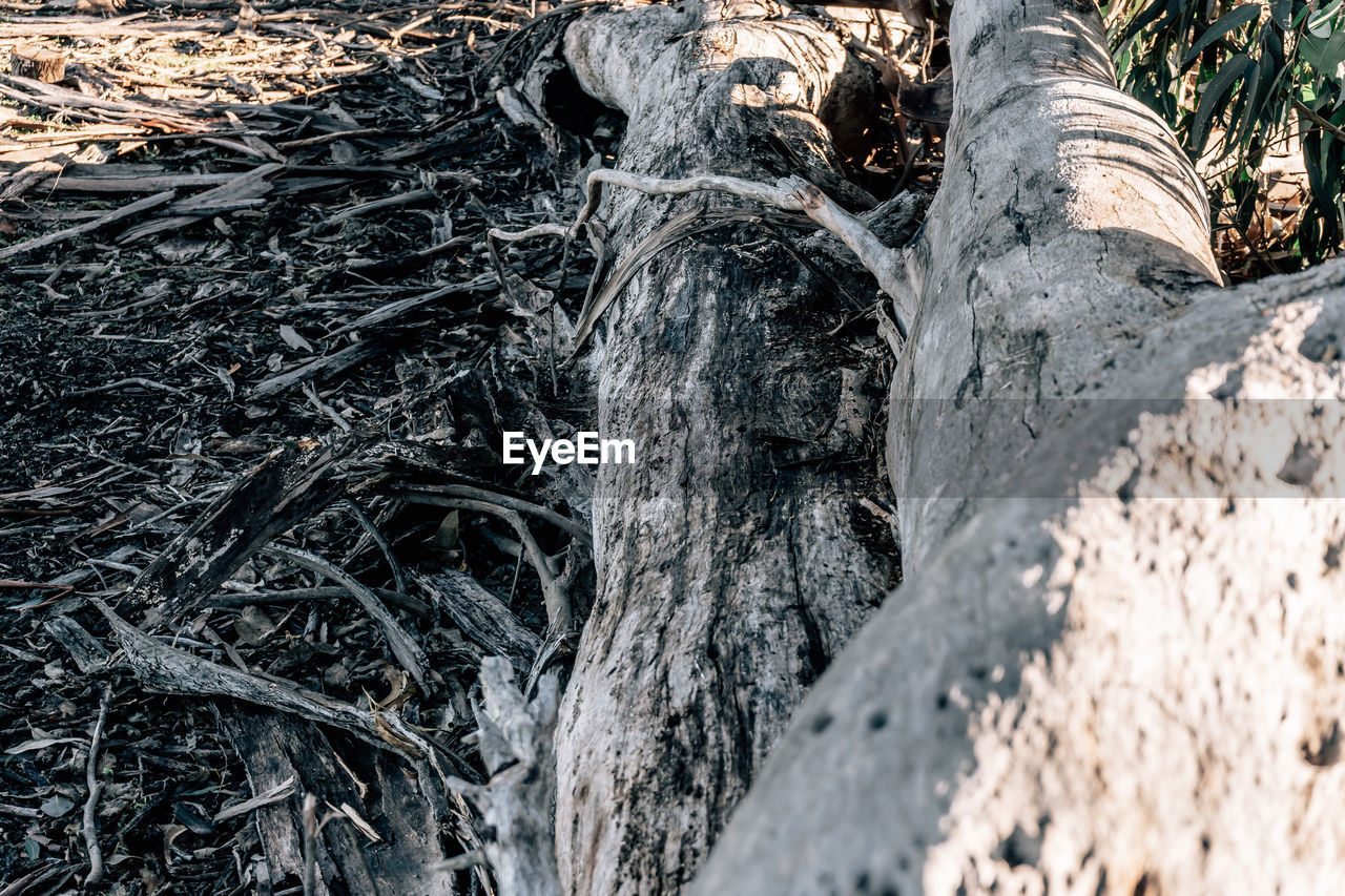plant, tree, tree trunk, trunk, land, nature, no people, forest, day, growth, tranquility, close-up, textured, field, outdoors, wood - material, plant bark, beauty in nature, sunlight, selective focus, woodland, bark