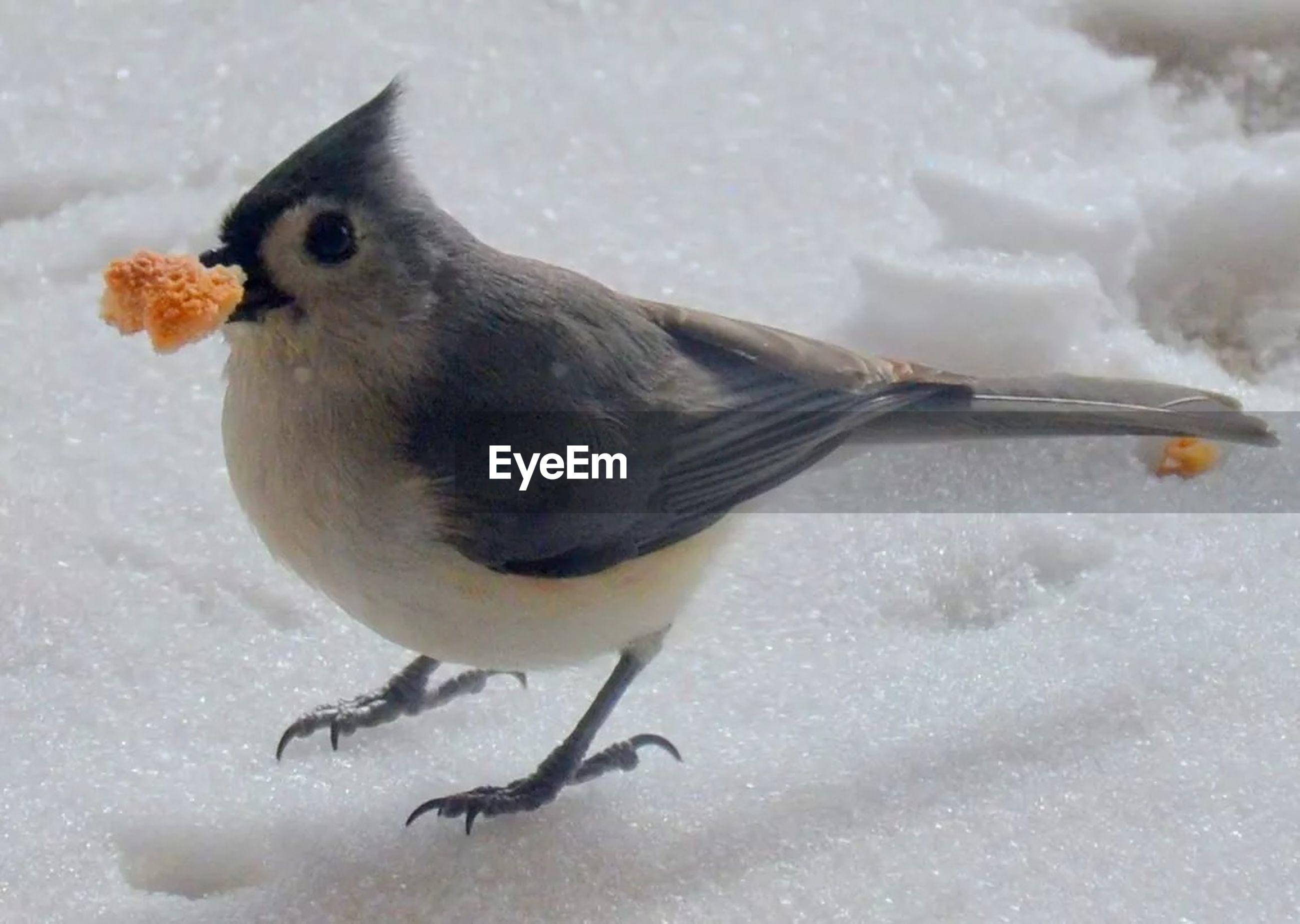 Close-up of bird feeding