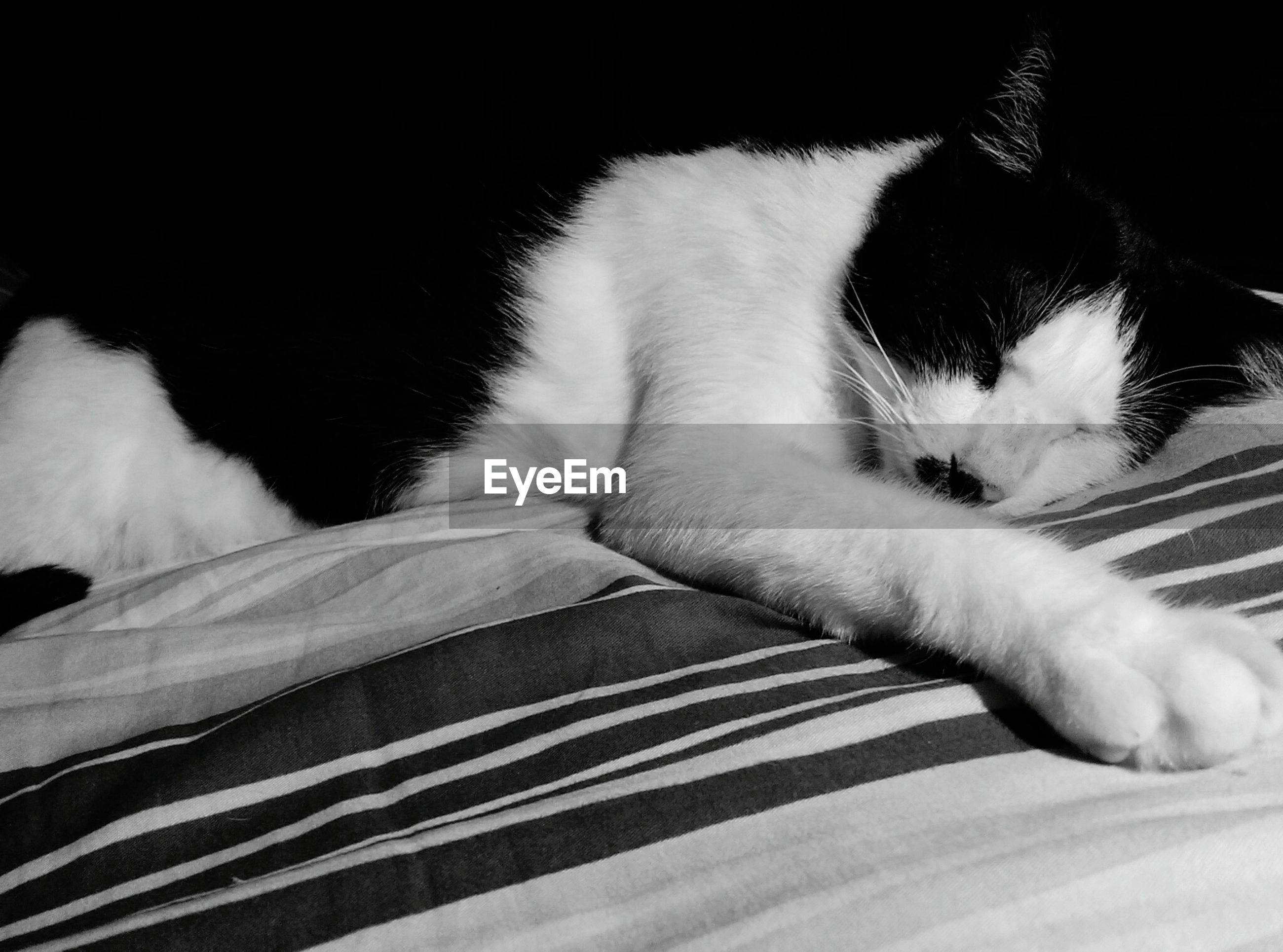domestic cat, pets, domestic animals, animal themes, one animal, mammal, feline, cat, indoors, lying down, relaxation, no people, close-up, day