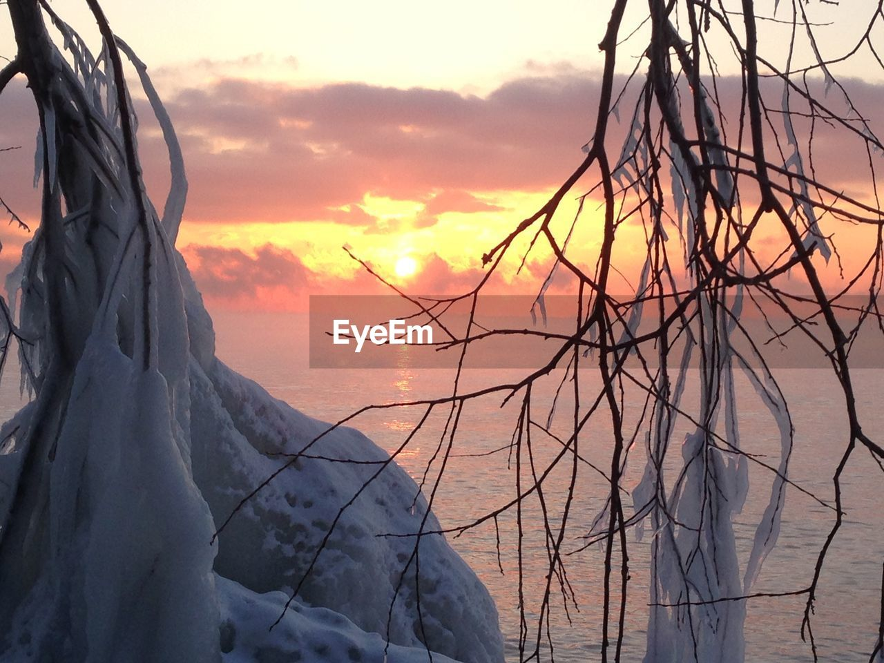Close-up of frozen plants against sea during sunset