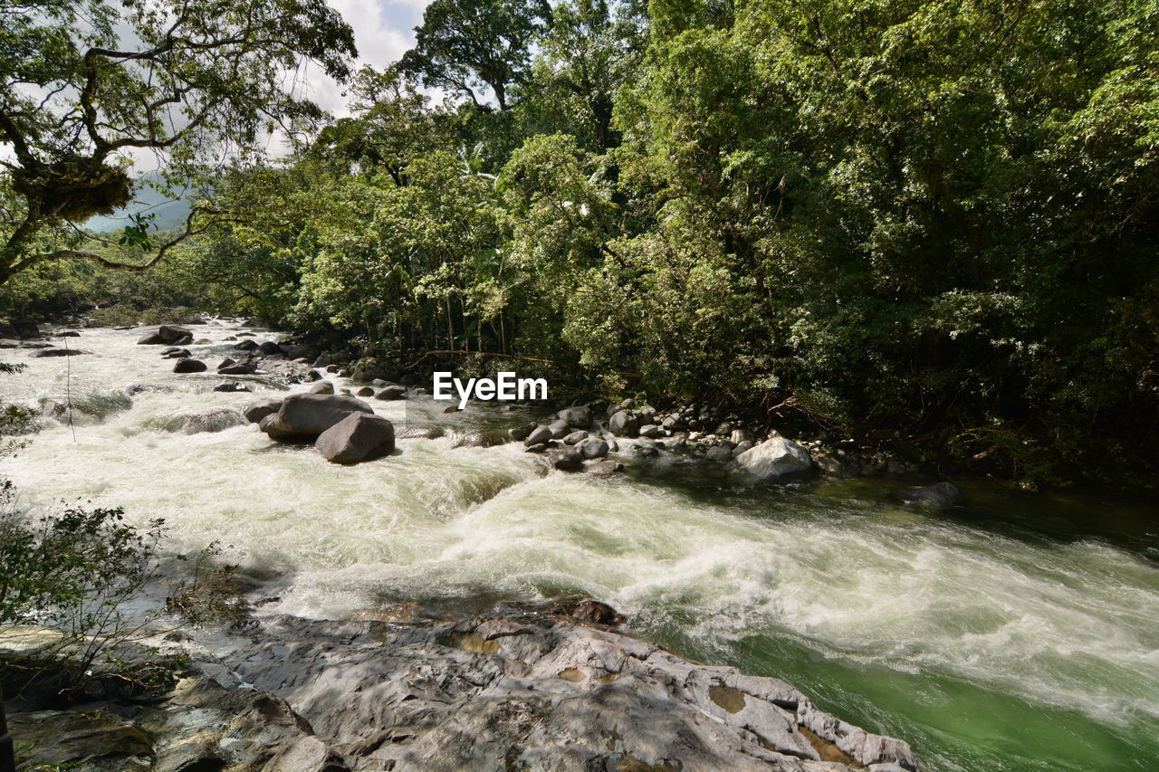 plant, tree, water, rock, solid, rock - object, motion, nature, beauty in nature, day, scenics - nature, flowing water, no people, river, forest, land, growth, environment, tranquility, outdoors, flowing, stream - flowing water
