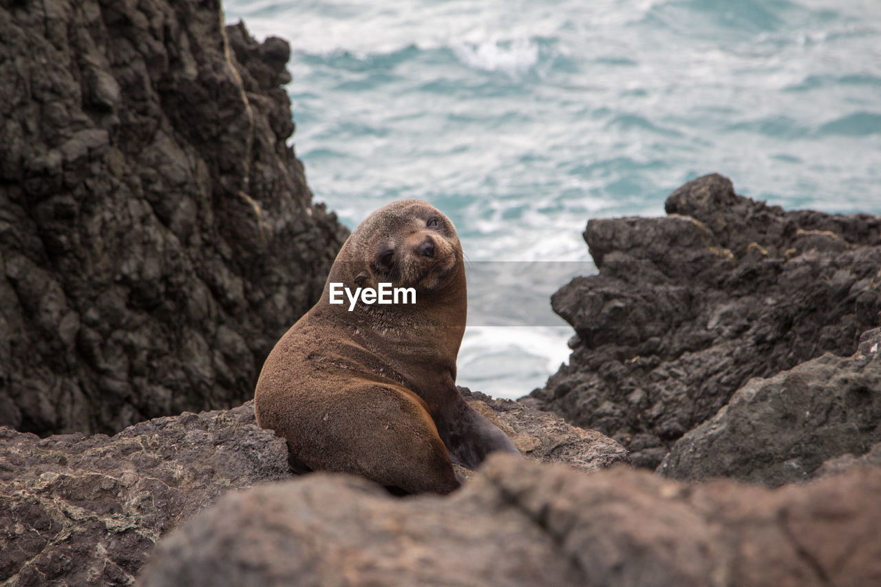 Close-up of seal on rock formation against sea