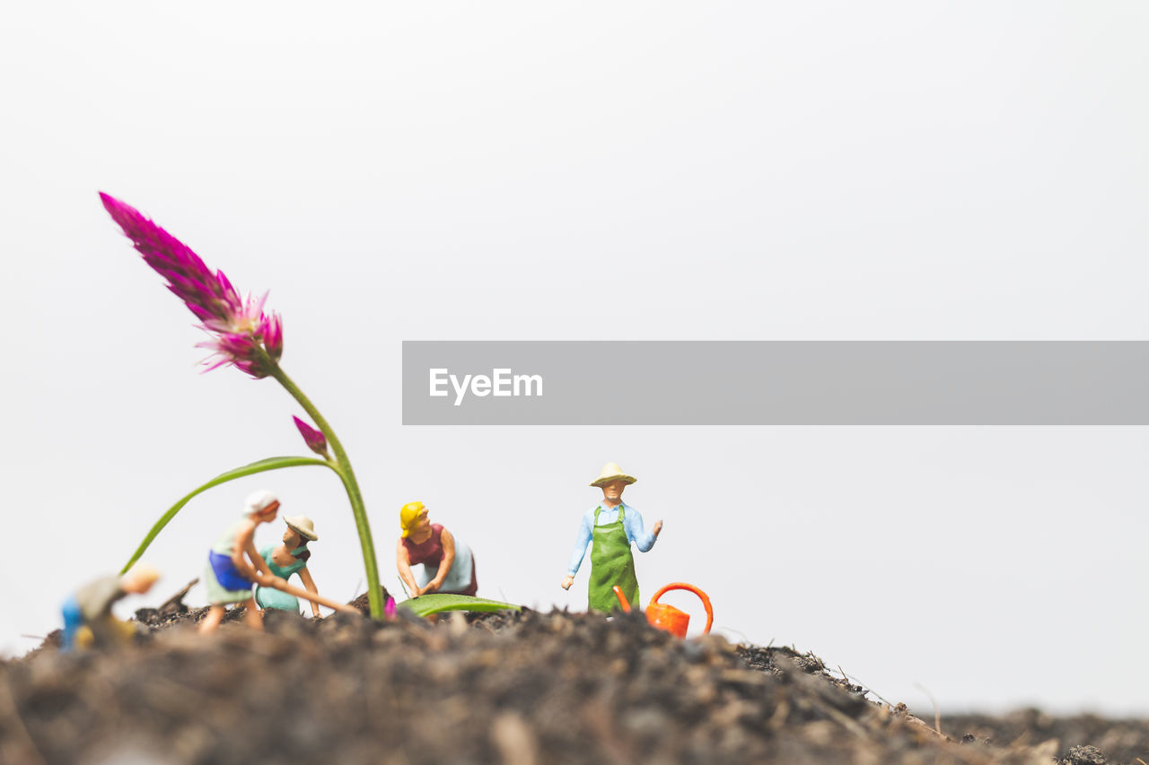 copy space, nature, sky, growth, plant, flower, flowering plant, beauty in nature, selective focus, freshness, day, clear sky, fragility, vulnerability, close-up, low angle view, outdoors, land, no people, flower head, surface level