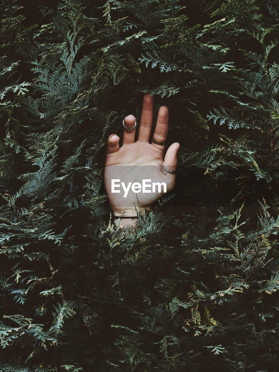 Person Hand In A Bush