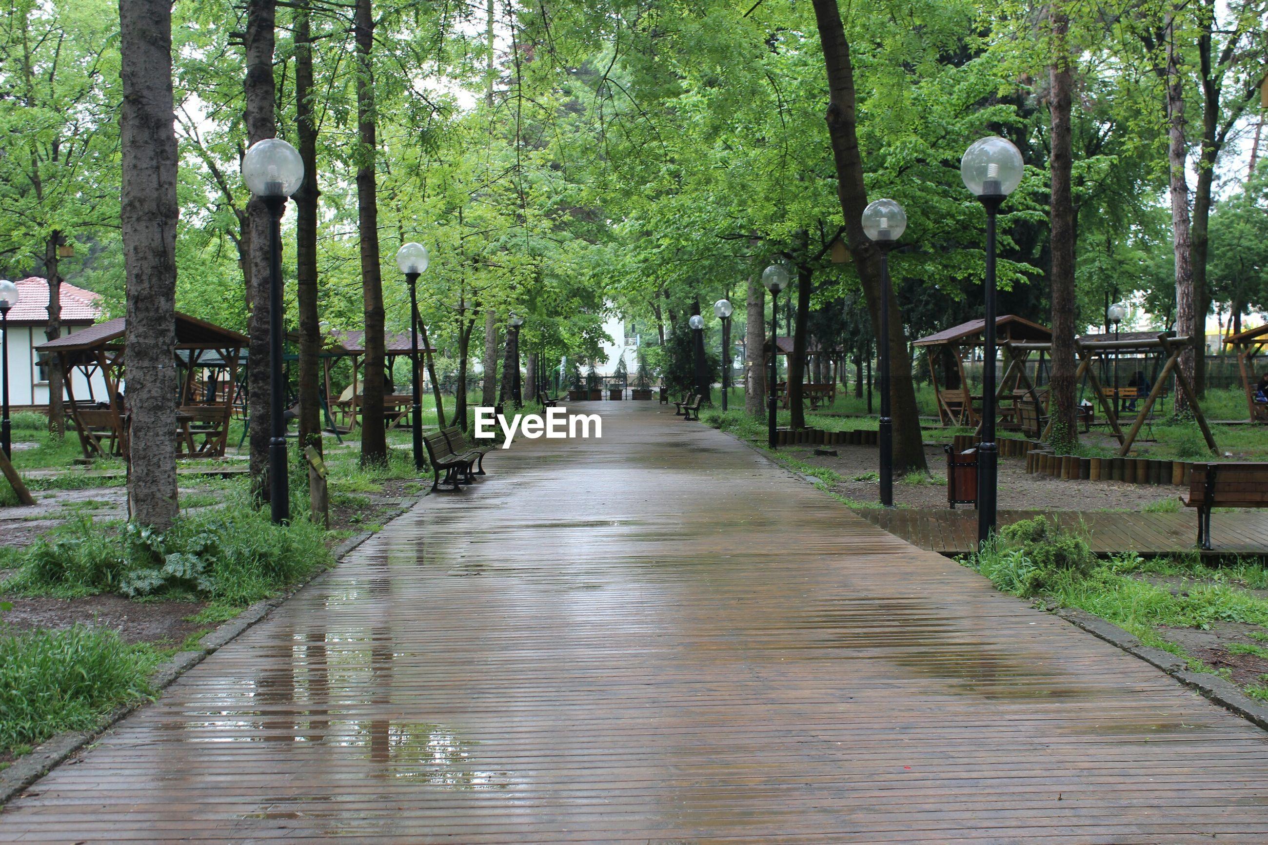Narrow walkway along plants in park