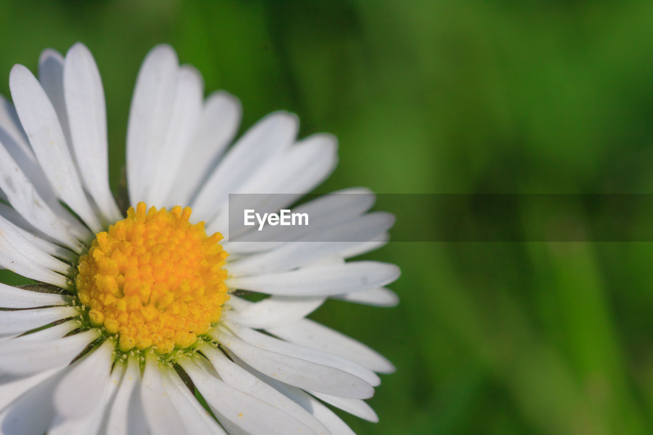 flower, petal, beauty in nature, nature, fragility, flower head, growth, freshness, close-up, plant, pollen, blooming, outdoors, no people, day, focus on foreground, springtime