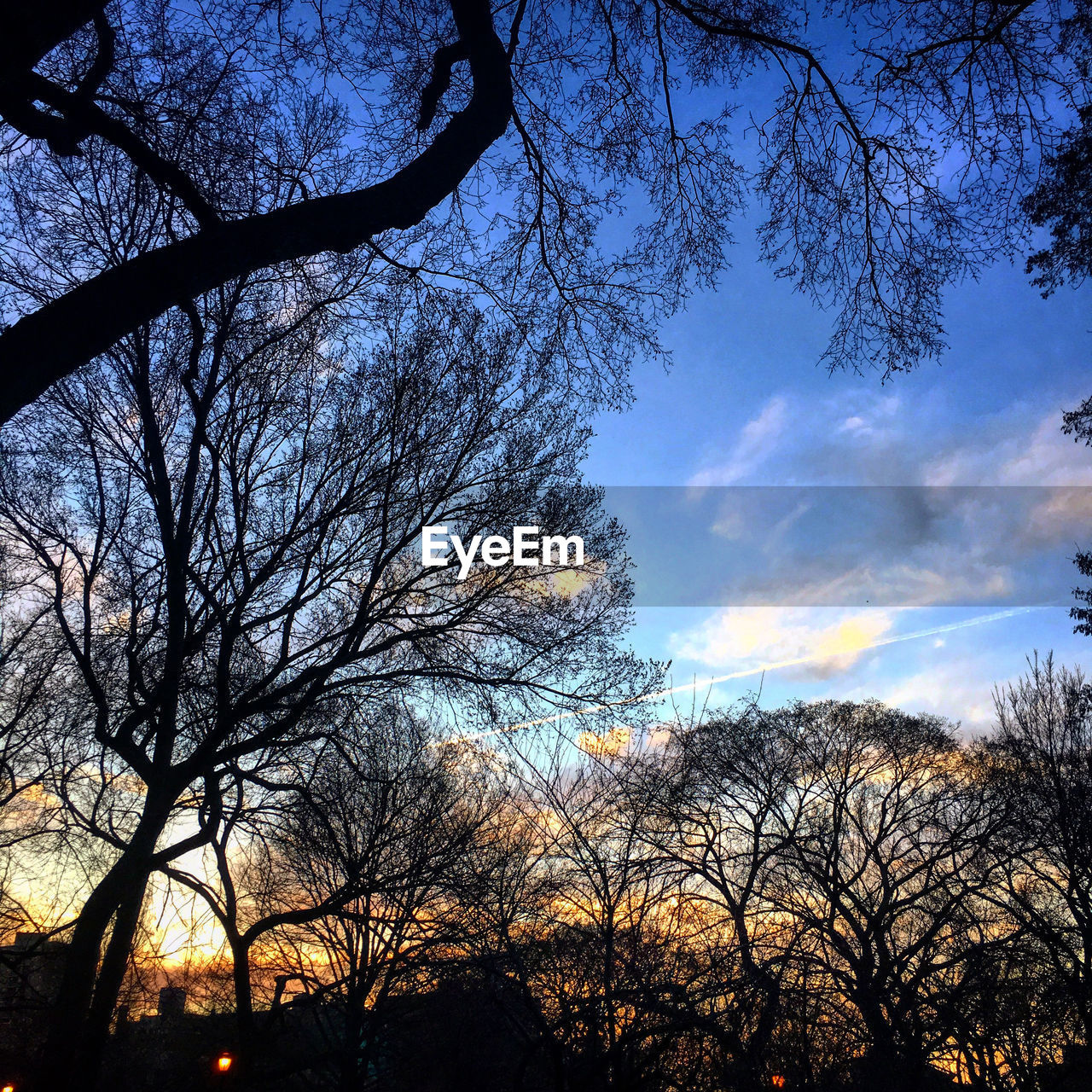 tree, bare tree, branch, sky, beauty in nature, low angle view, nature, silhouette, tranquility, tranquil scene, scenics, outdoors, cloud - sky, no people, day, growth
