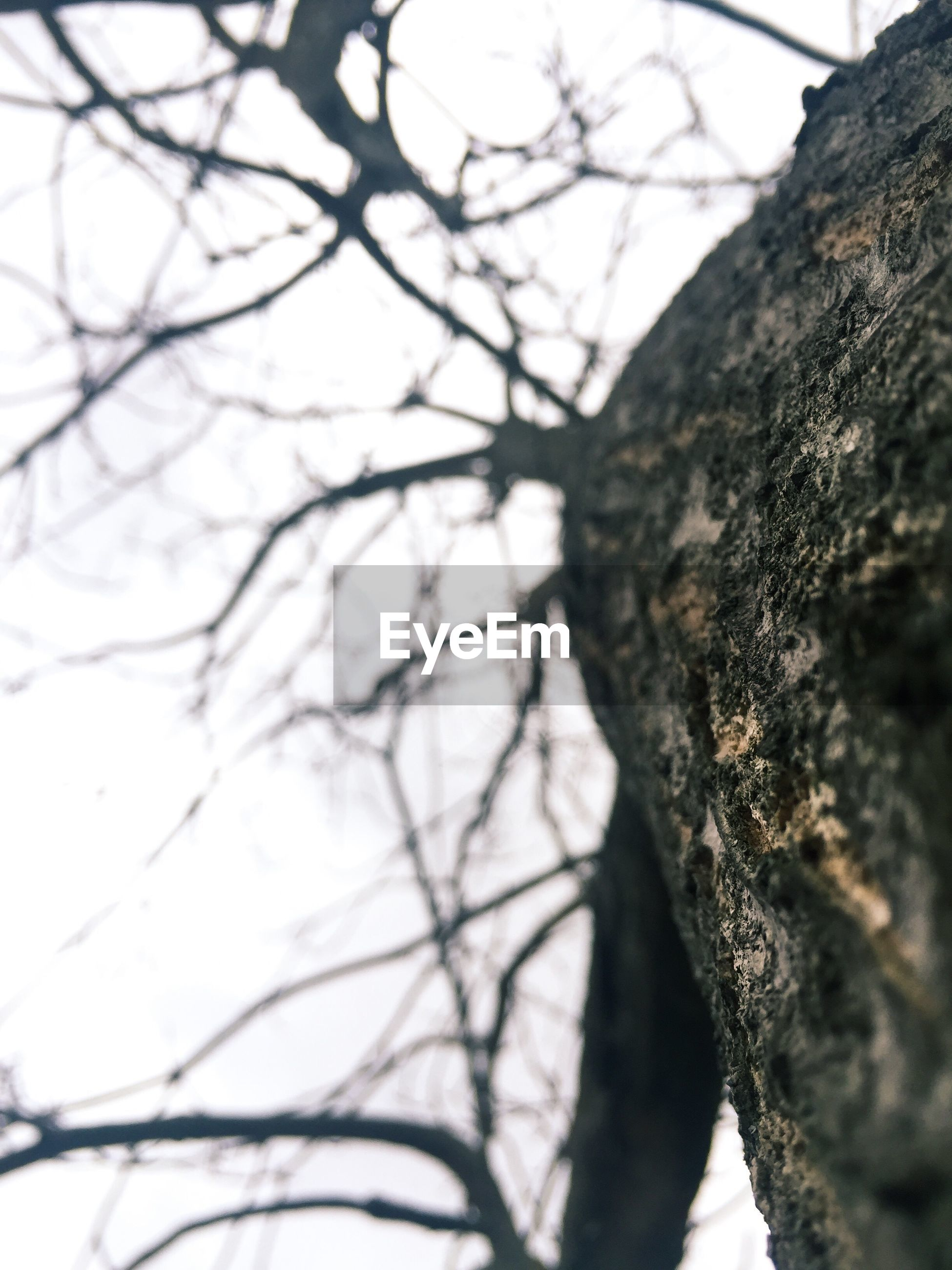 branch, tree, tree trunk, bare tree, focus on foreground, nature, close-up, low angle view, selective focus, tranquility, outdoors, day, bark, textured, no people, growth, beauty in nature, clear sky, twig, wood - material