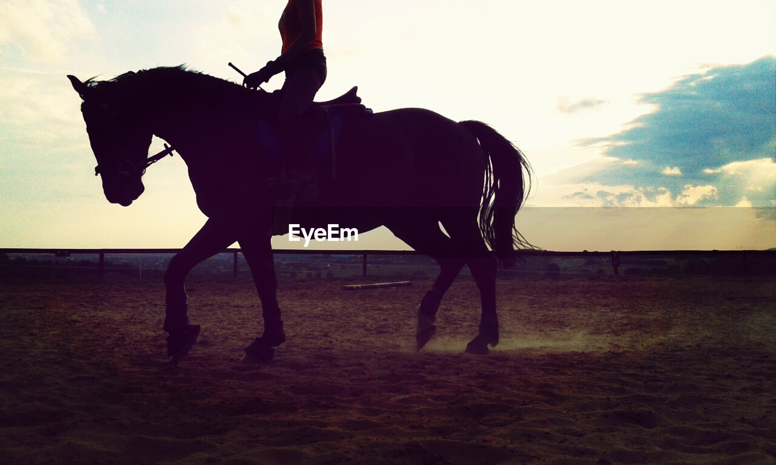 horse, animal themes, domestic animals, sky, working animal, mammal, livestock, standing, field, one animal, full length, sunset, herbivorous, one person, silhouette, nature, side view, horseback riding, landscape, outdoors