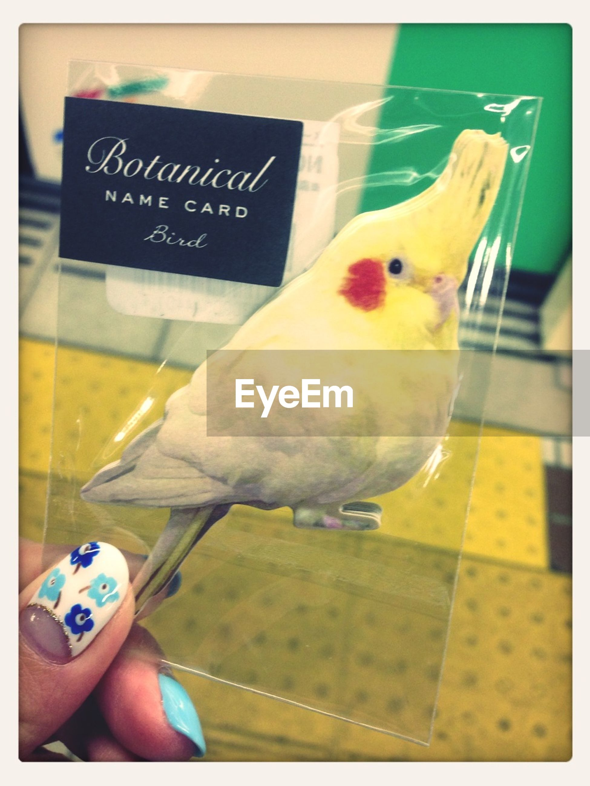 transfer print, animal themes, auto post production filter, one animal, person, holding, close-up, indoors, text, western script, part of, bird, yellow, communication, toy, cropped, human finger
