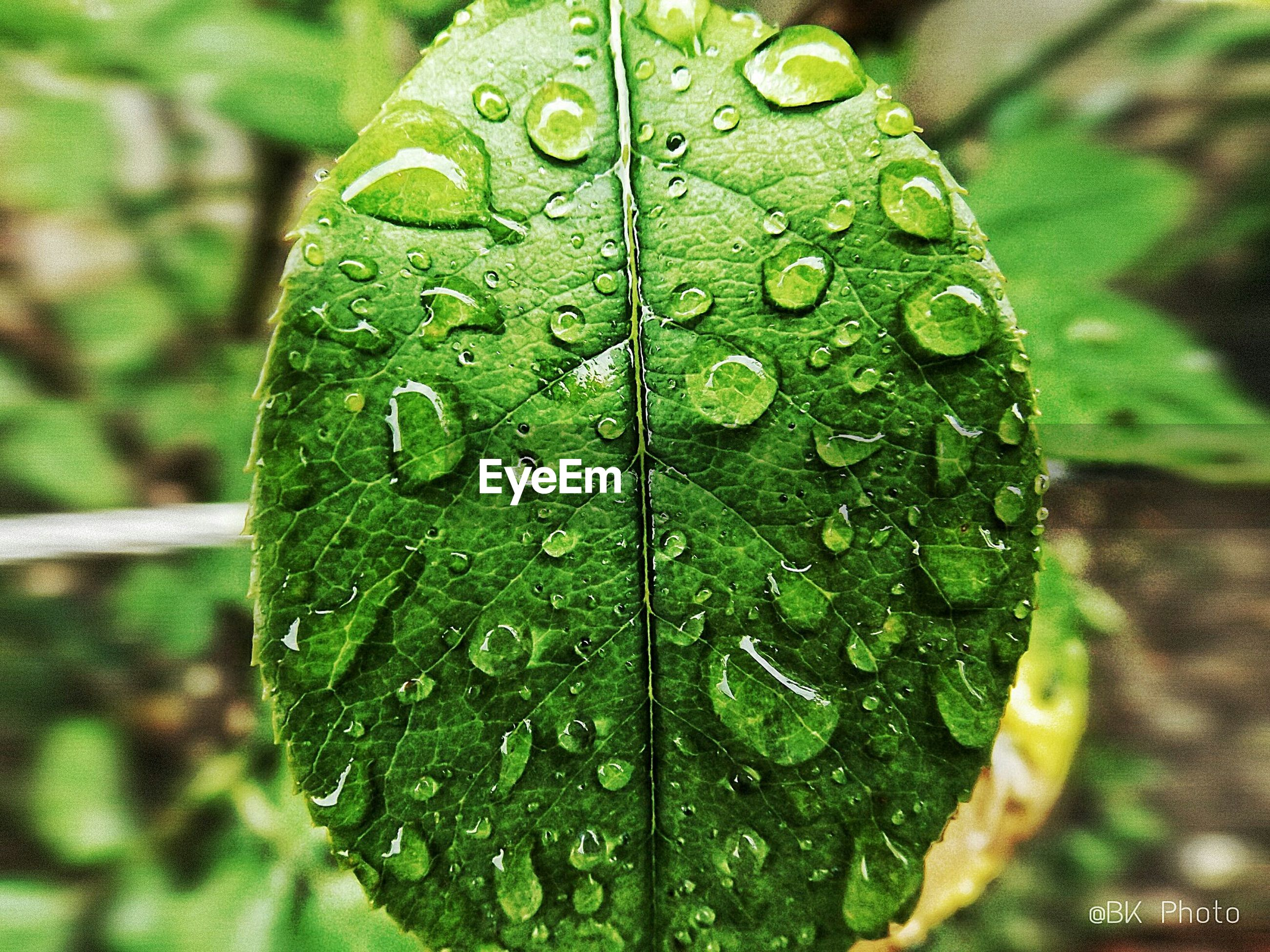 drop, leaf, wet, water, close-up, leaf vein, green color, freshness, dew, growth, raindrop, focus on foreground, nature, fragility, beauty in nature, natural pattern, droplet, plant, water drop, rain