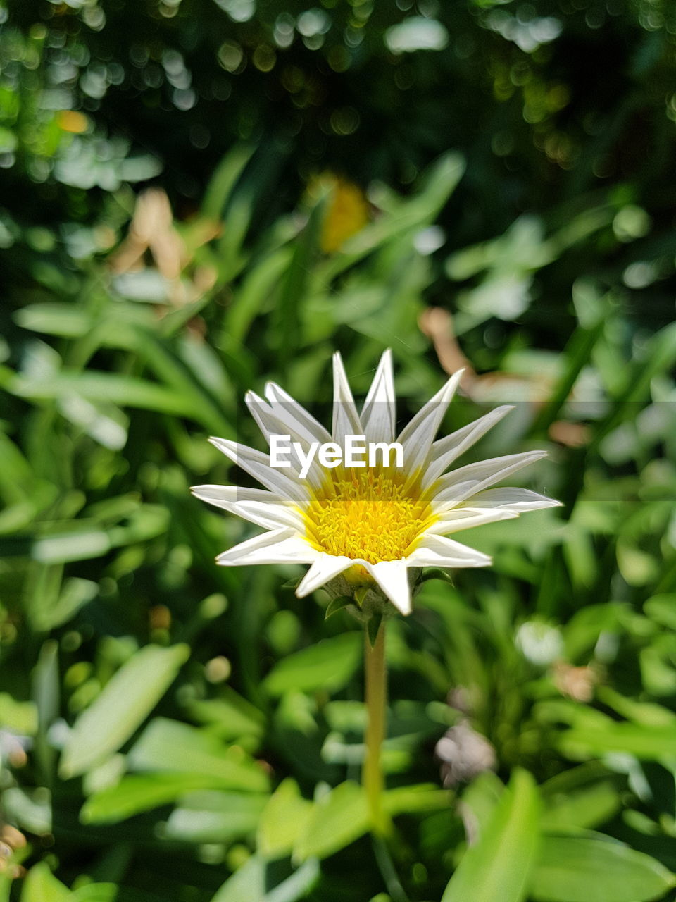 flower, petal, growth, nature, fragility, beauty in nature, freshness, flower head, plant, green color, day, yellow, blooming, leaf, outdoors, close-up, no people