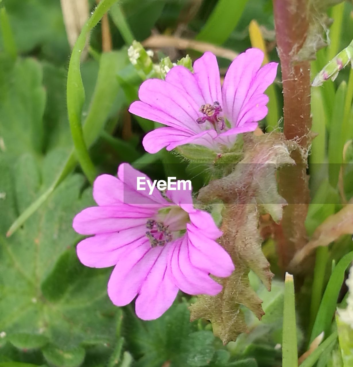 flower, nature, growth, plant, beauty in nature, fragility, petal, freshness, outdoors, flower head, no people, blooming, green color, day, close-up, leaf